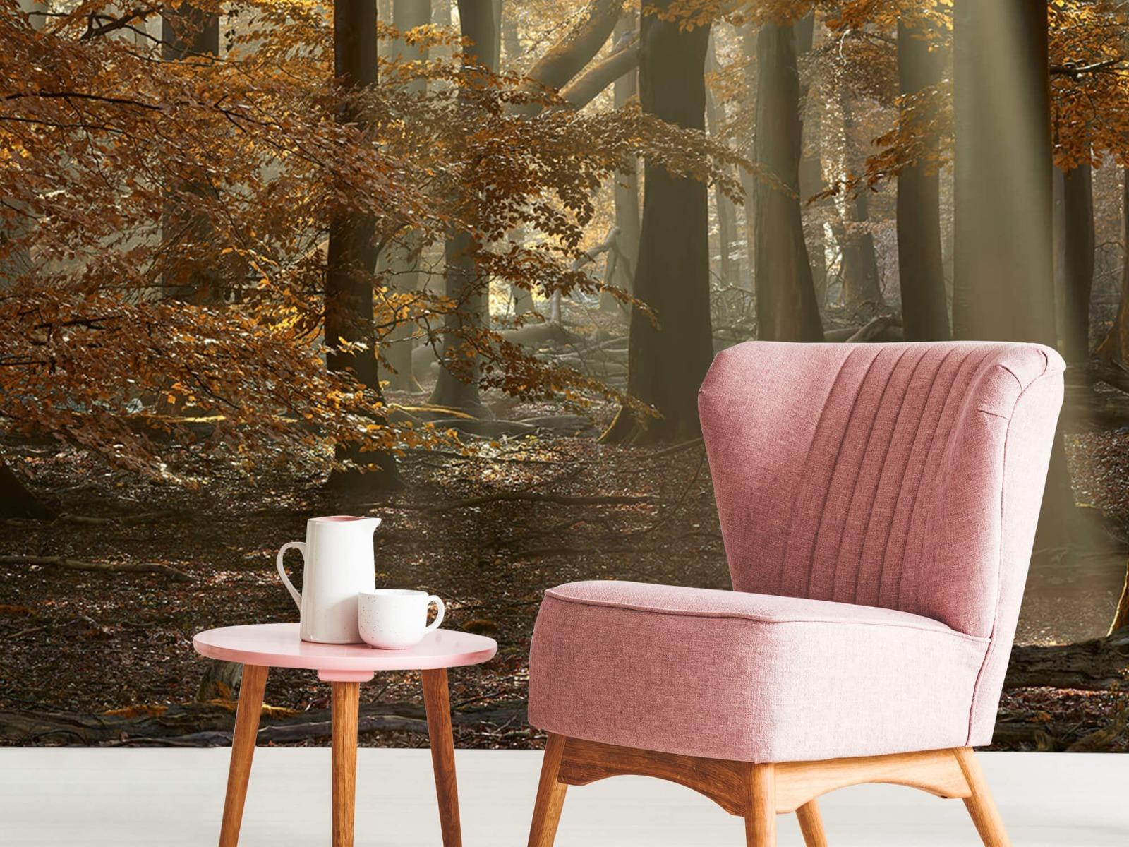 Bos behang - Herfstkleuren in het bos - Slaapkamer 4