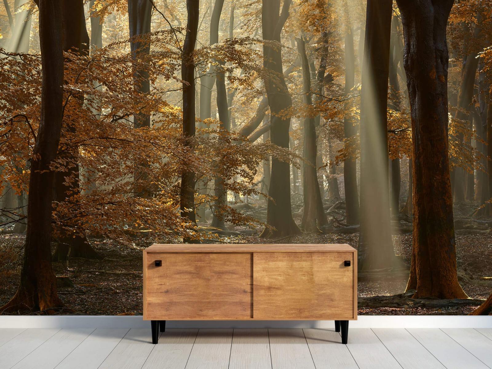 Bos behang - Herfstkleuren in het bos - Slaapkamer 11