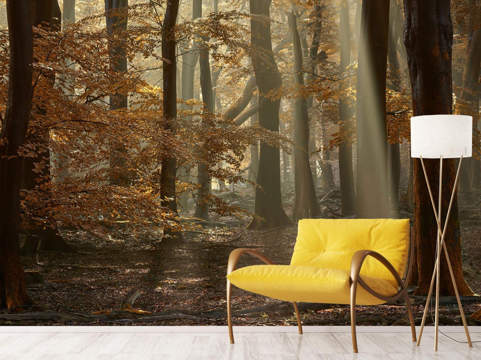 Bos behang - Herfstkleuren in het bos - Slaapkamer 12