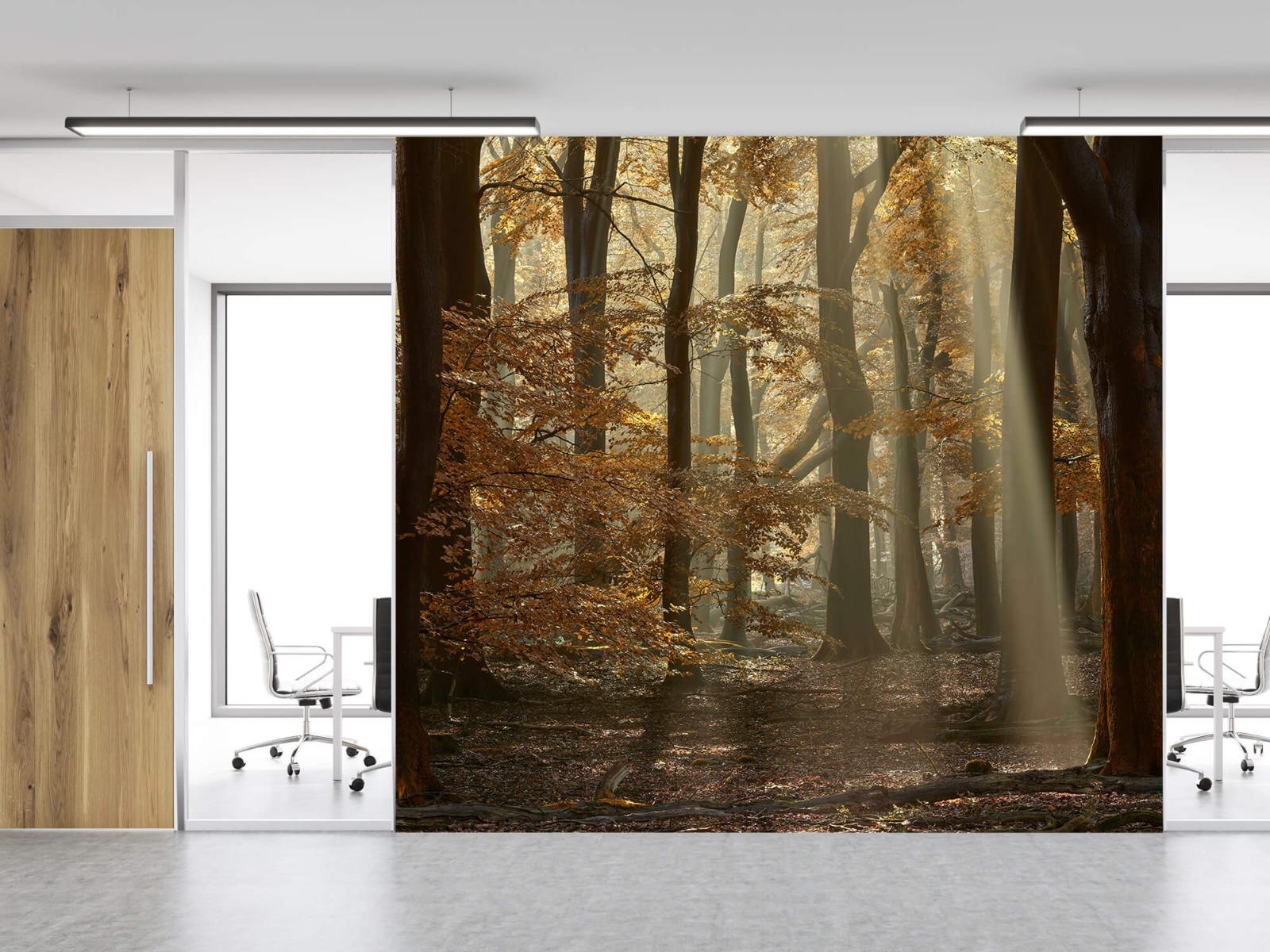 Bos behang - Herfstkleuren in het bos - Slaapkamer 13