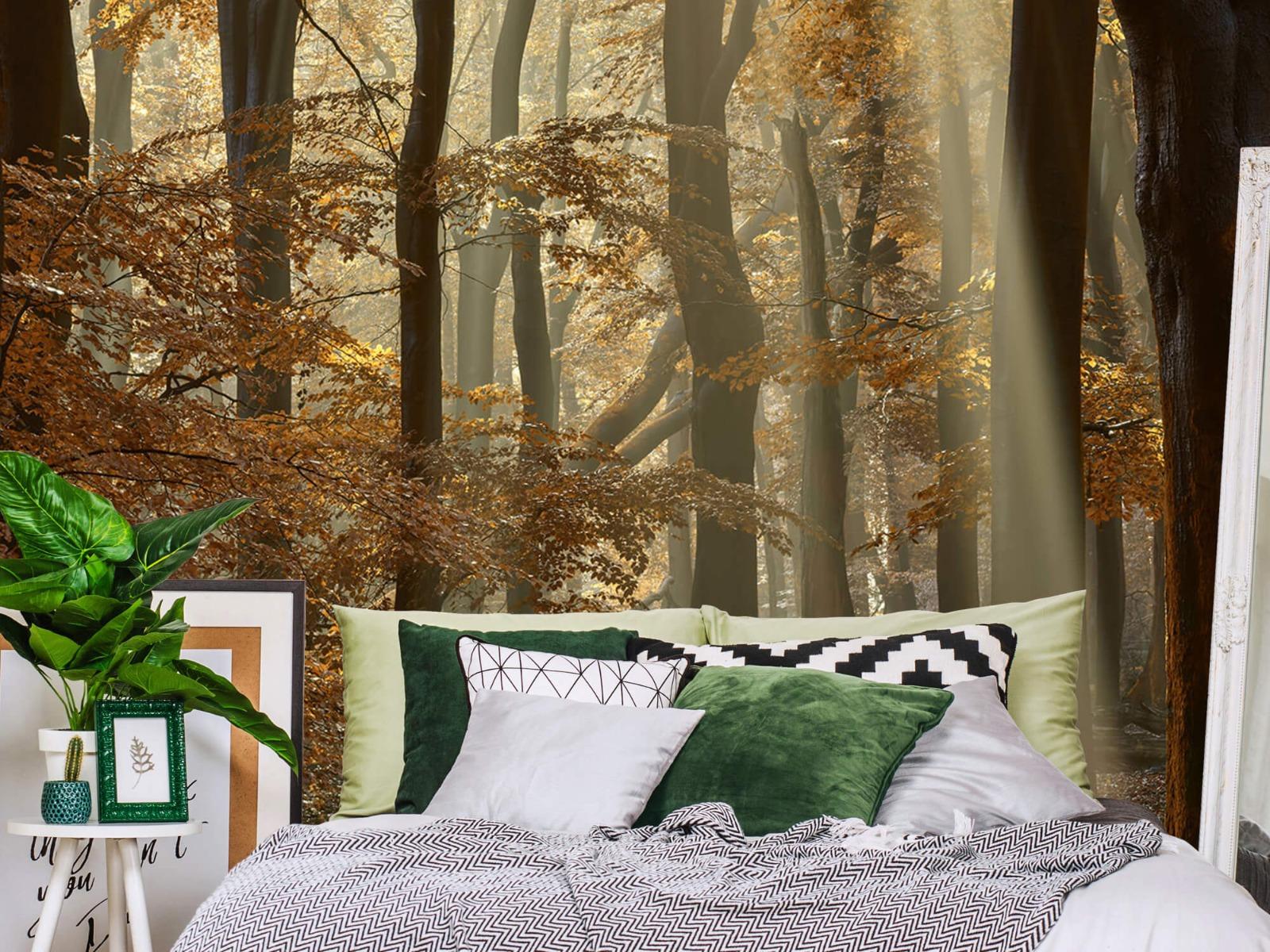 Bos behang - Herfstkleuren in het bos - Slaapkamer 14