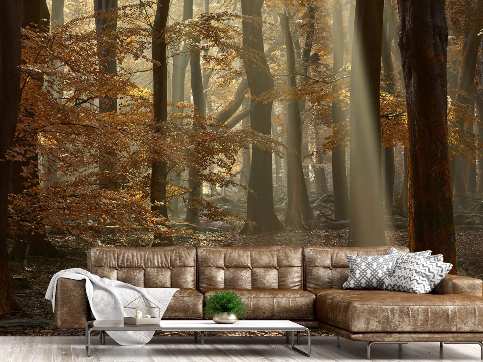 Bos behang - Herfstkleuren in het bos - Slaapkamer 1