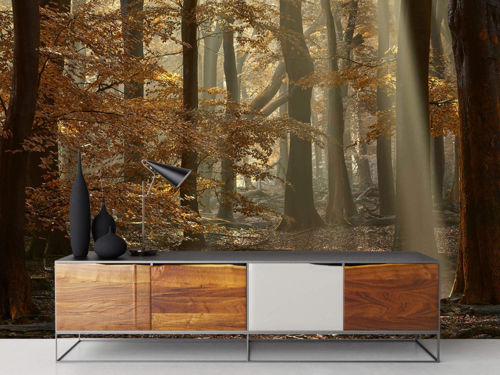 Bos behang - Herfstkleuren in het bos - Slaapkamer 16