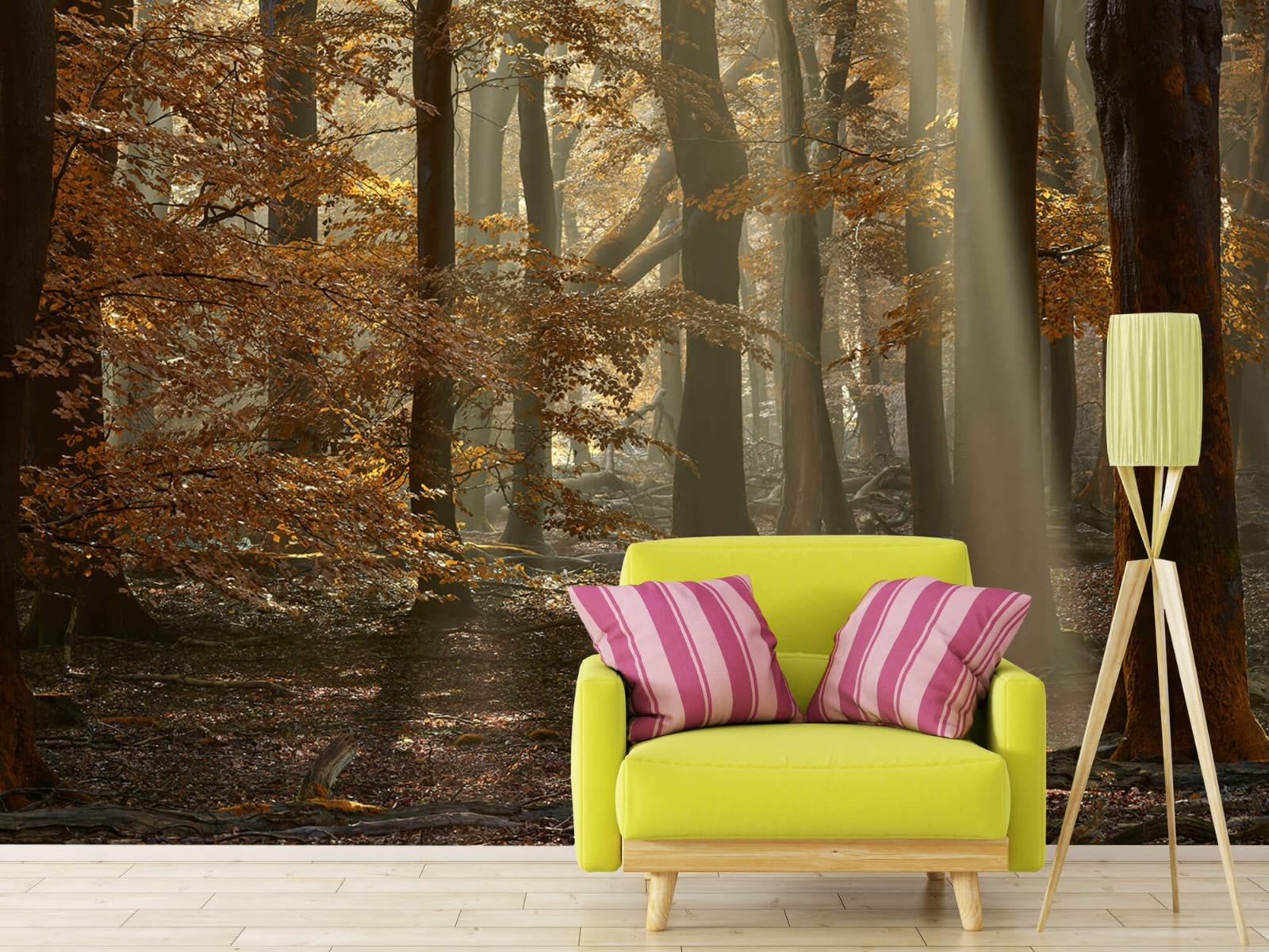 Bos behang - Herfstkleuren in het bos - Slaapkamer 17