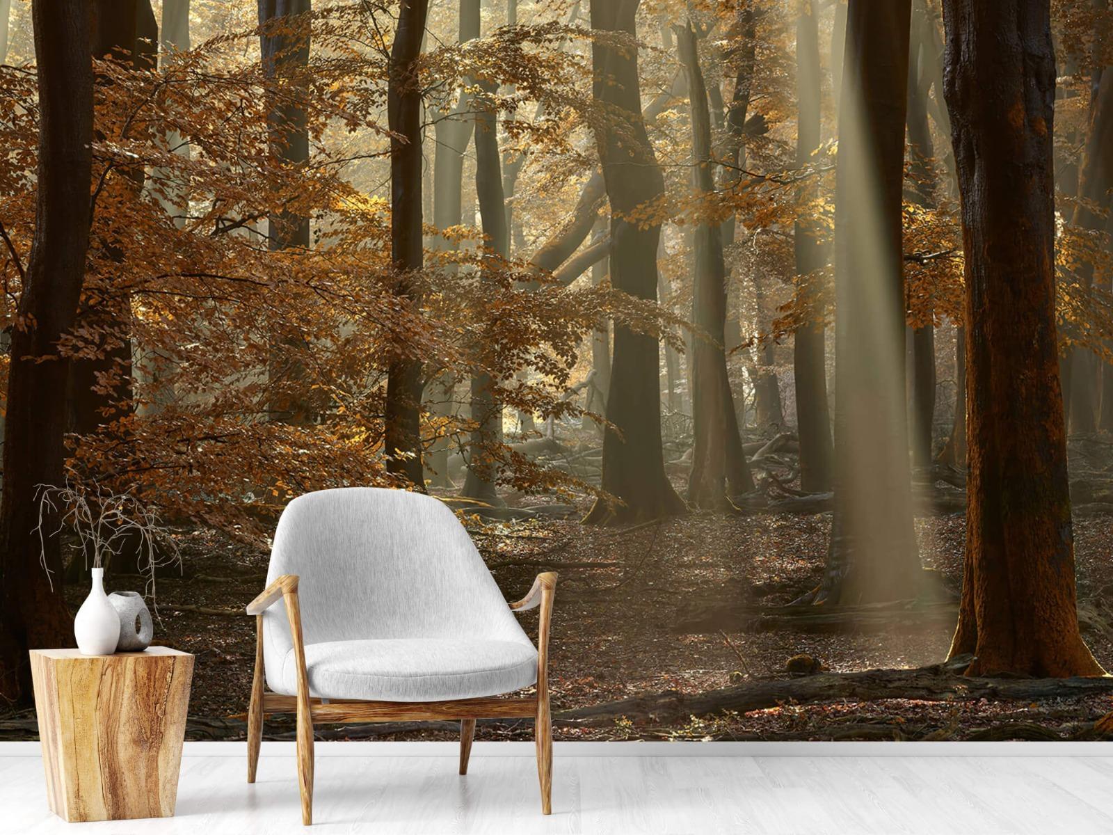 Bos behang - Herfstkleuren in het bos - Slaapkamer 18
