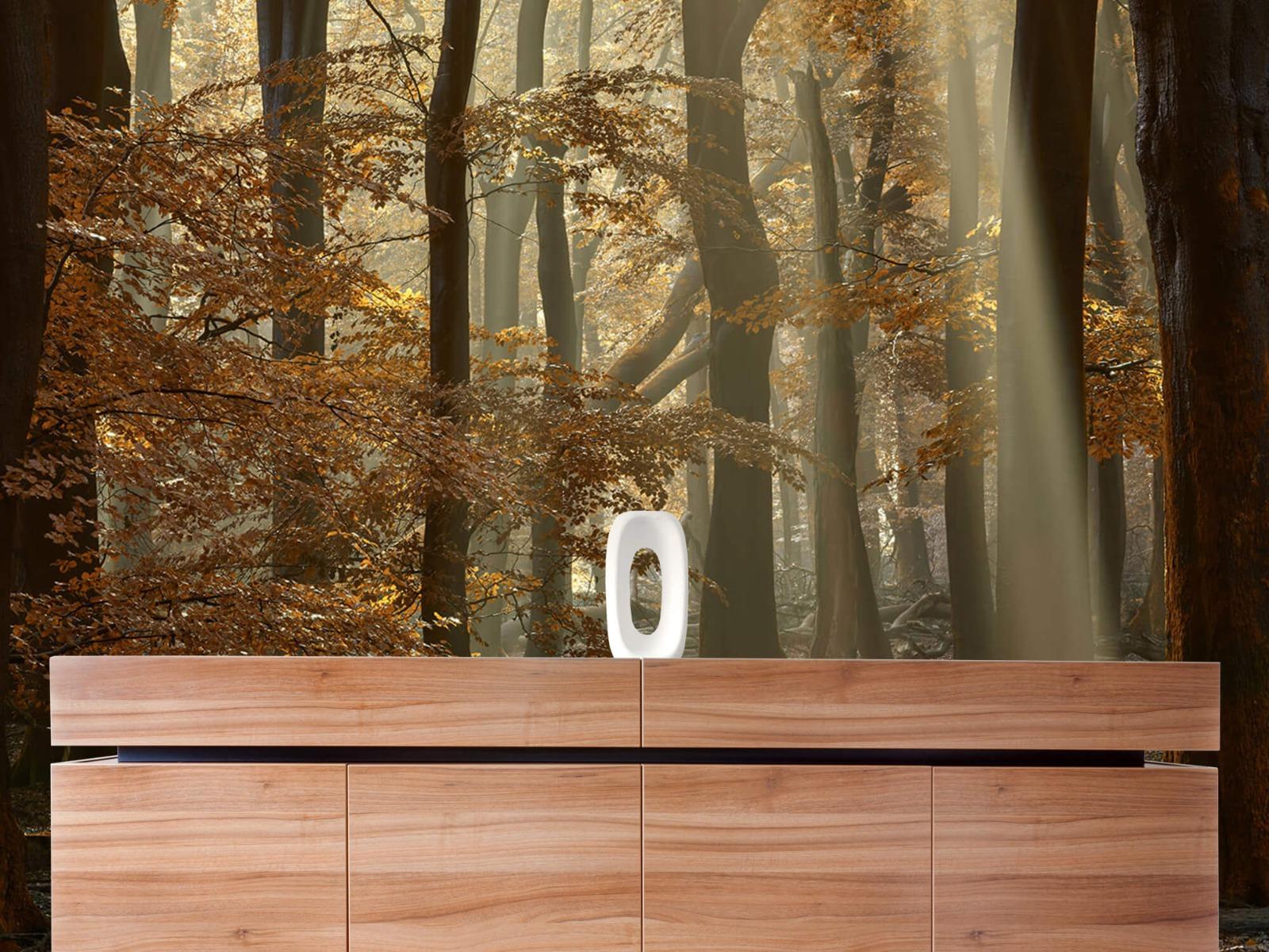 Bos behang - Herfstkleuren in het bos - Slaapkamer 20