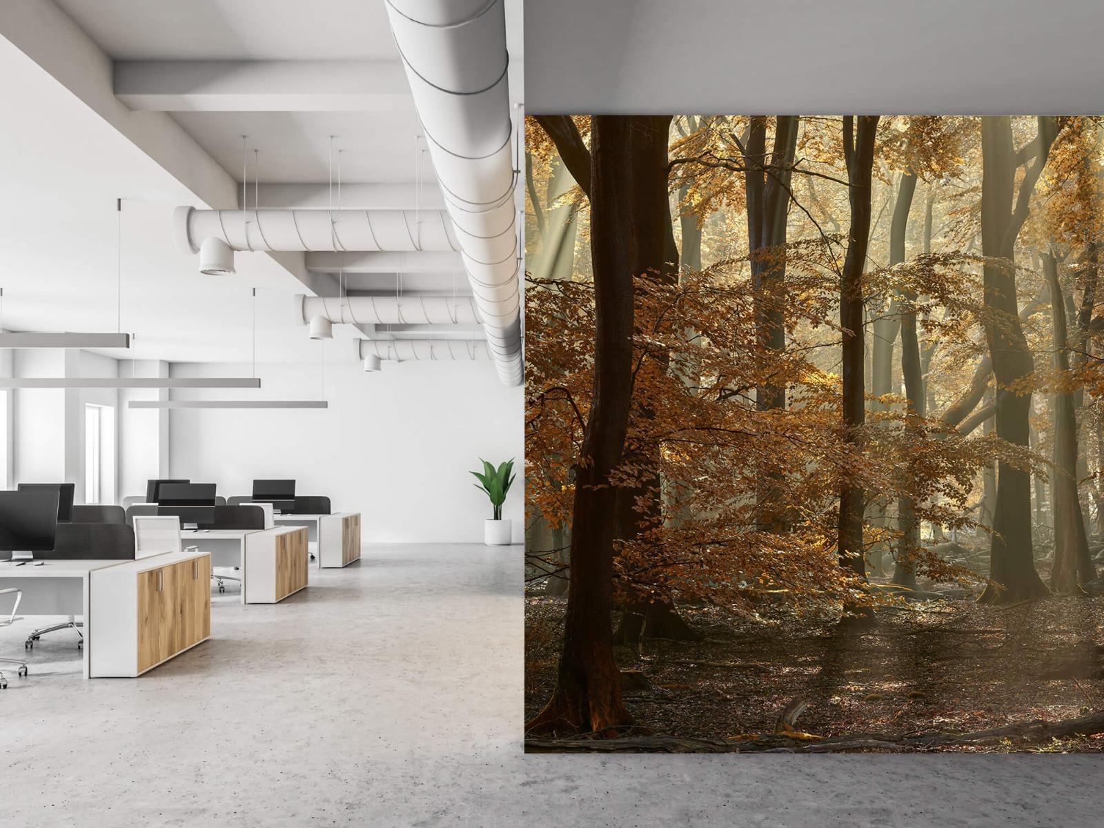 Bos behang - Herfstkleuren in het bos - Slaapkamer 21