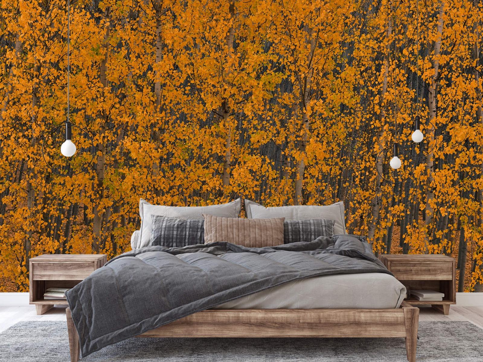 Herfst - Populieren bos - Slaapkamer 1