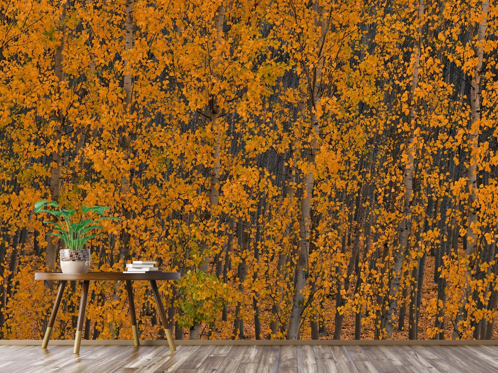 Herfst - Populieren bos - Slaapkamer 3