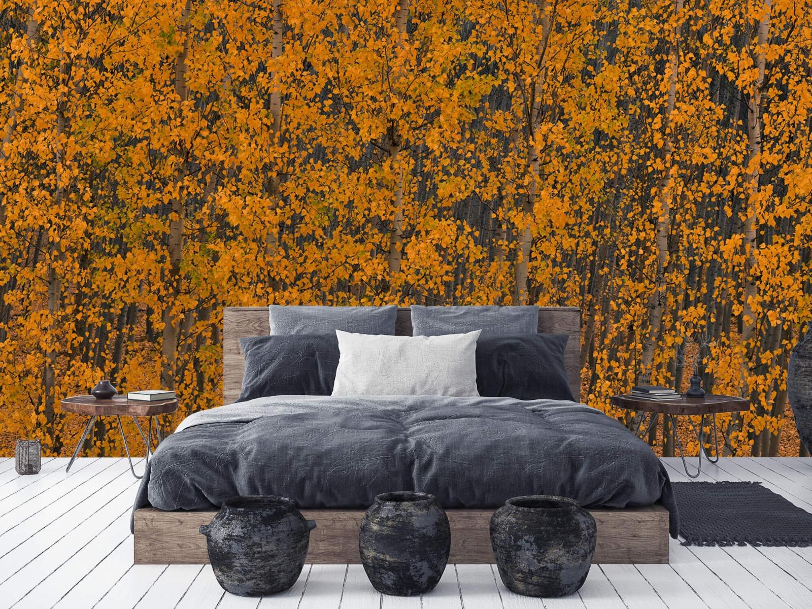 Herfst - Populieren bos - Slaapkamer 5