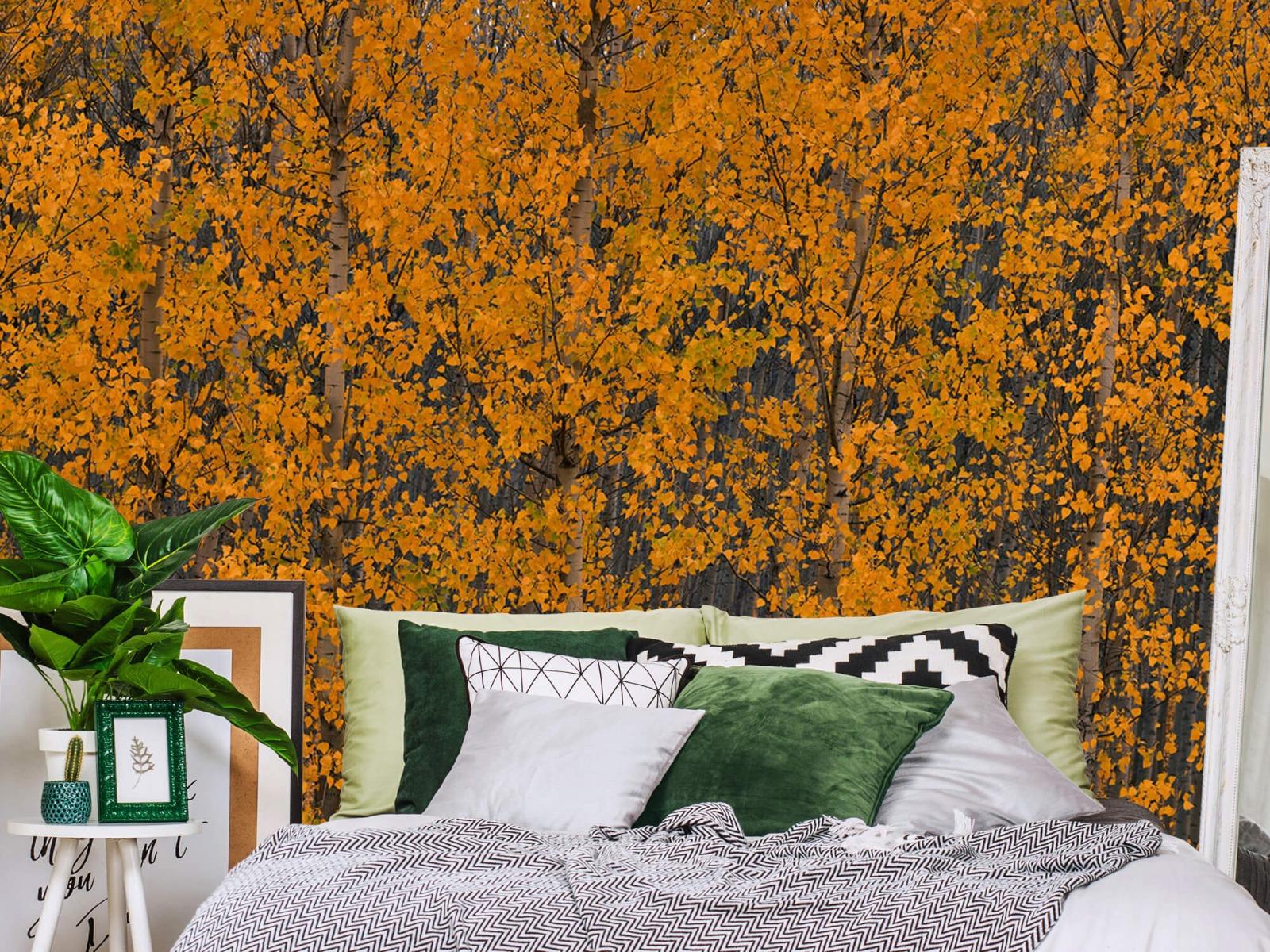 Herfst - Populieren bos - Slaapkamer 12