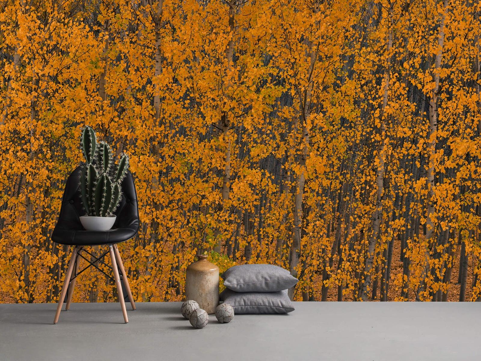 Herfst - Populieren bos - Slaapkamer 13
