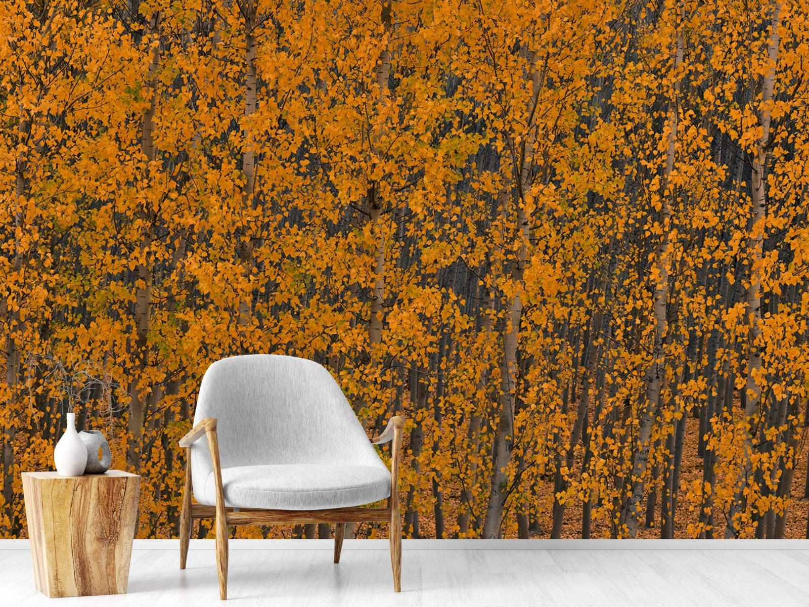 Herfst - Populieren bos - Slaapkamer 18