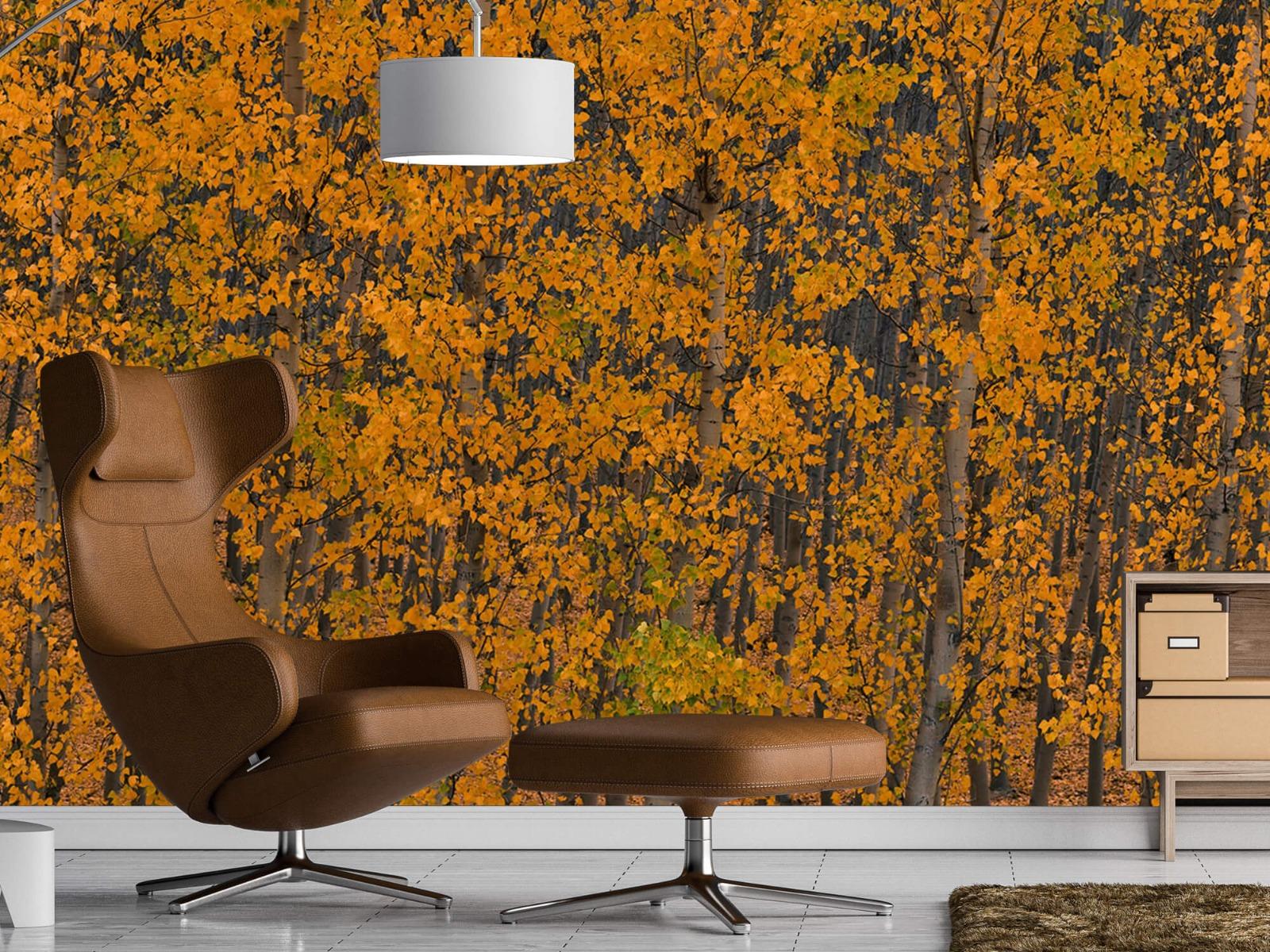 Herfst - Populieren bos - Slaapkamer 19