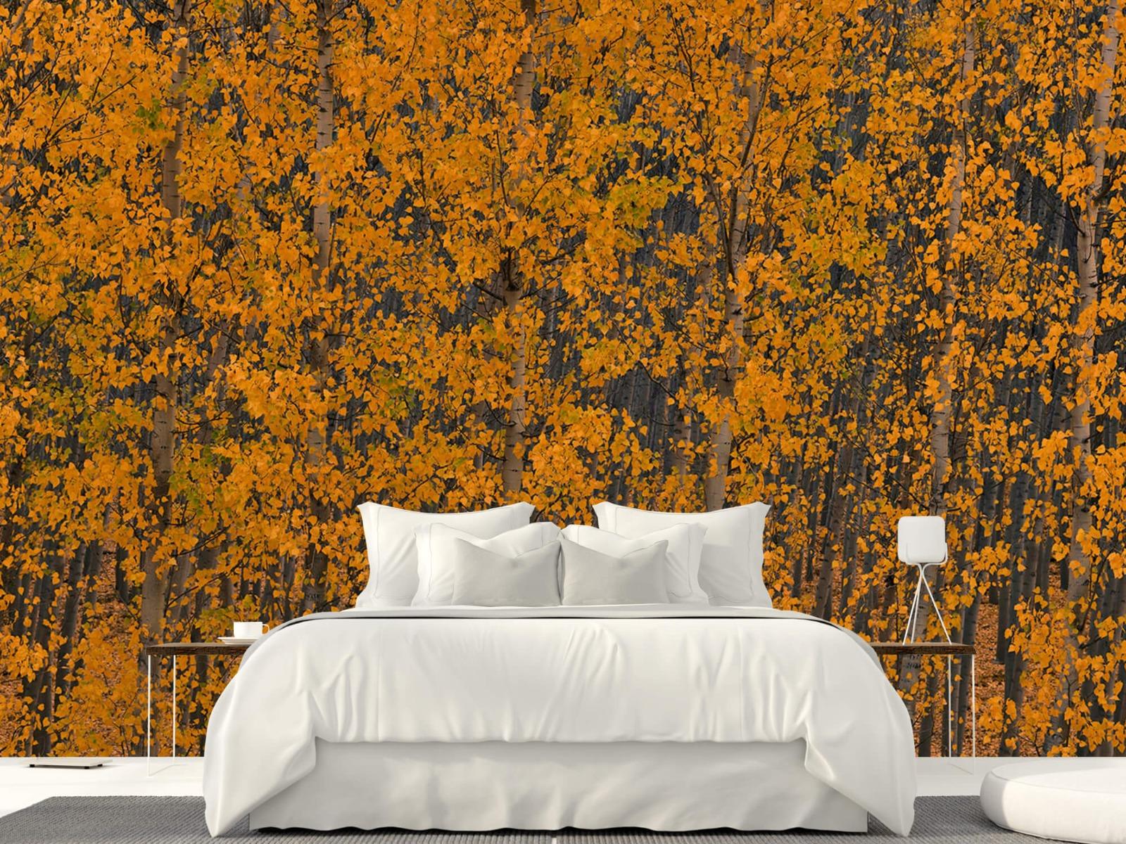 Herfst - Populieren bos - Slaapkamer 22