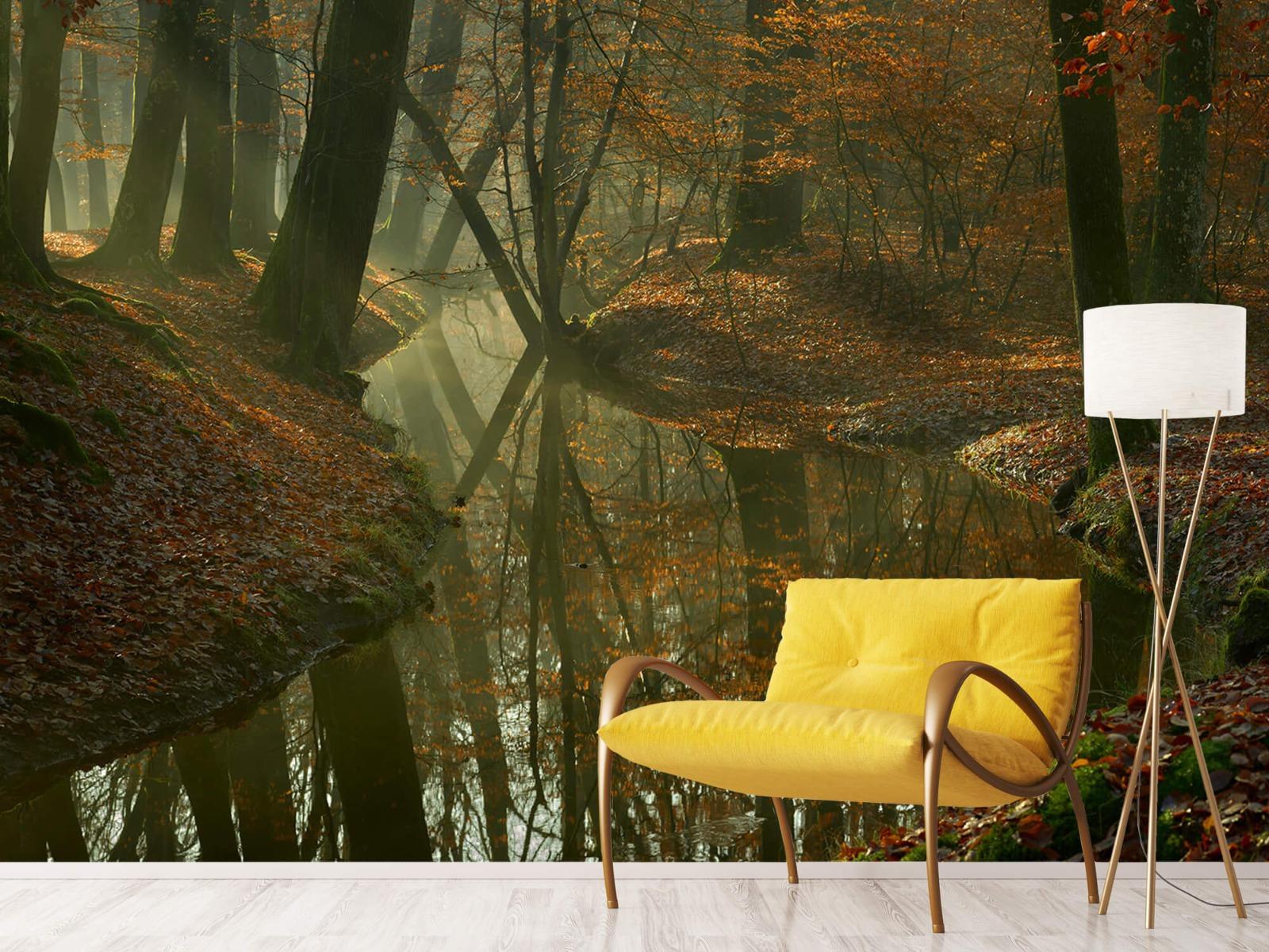 Herfst - Beek door het bos - Slaapkamer 11