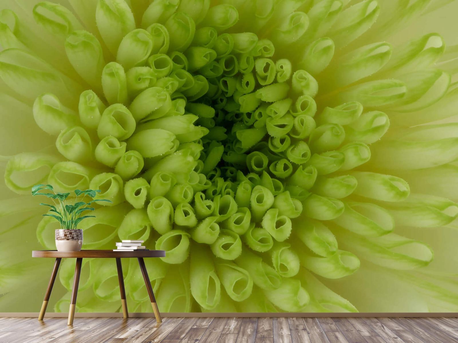 Overige - Close-up bloem - Woonkamer 4
