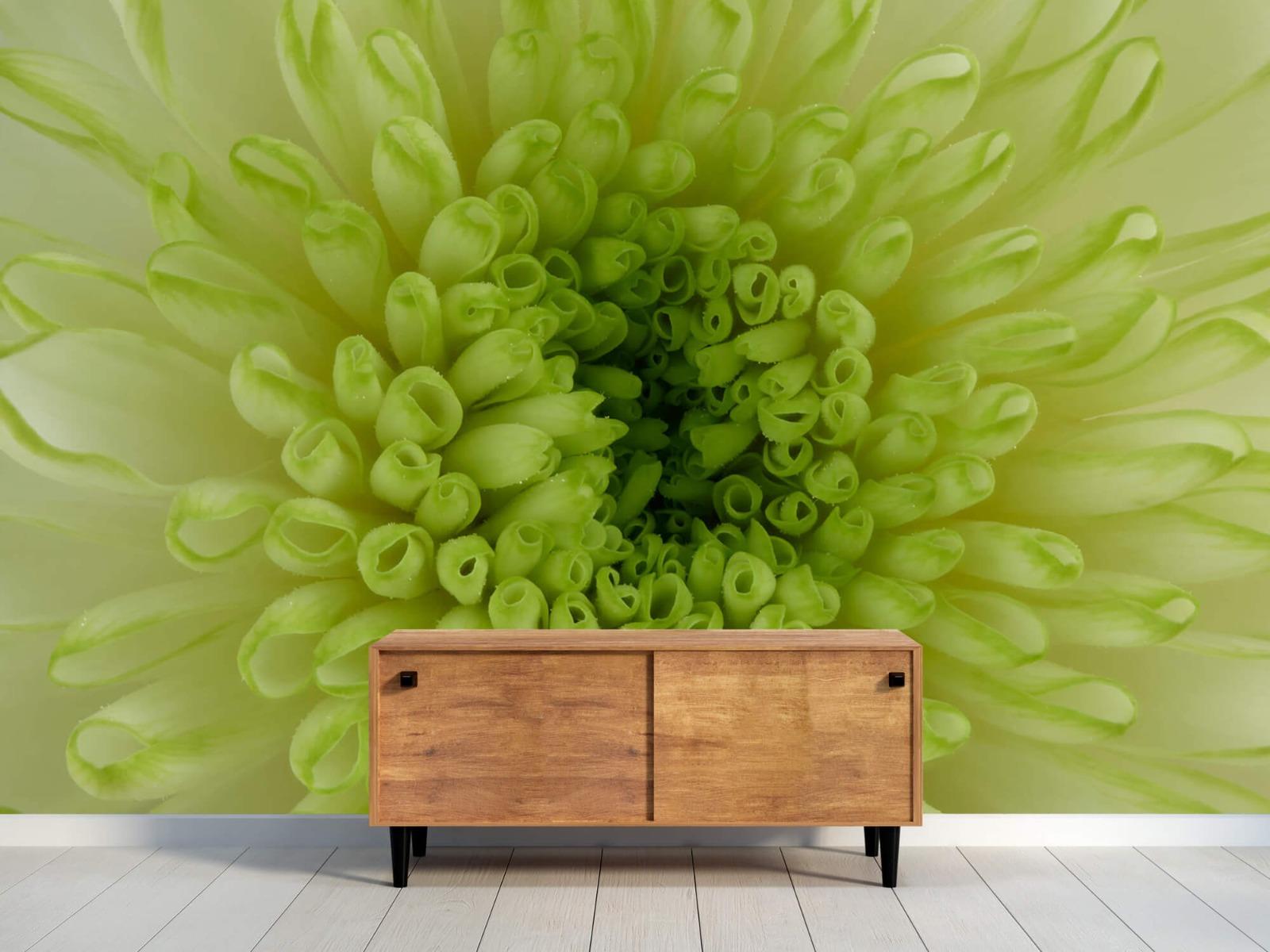 Overige - Close-up bloem - Woonkamer 9