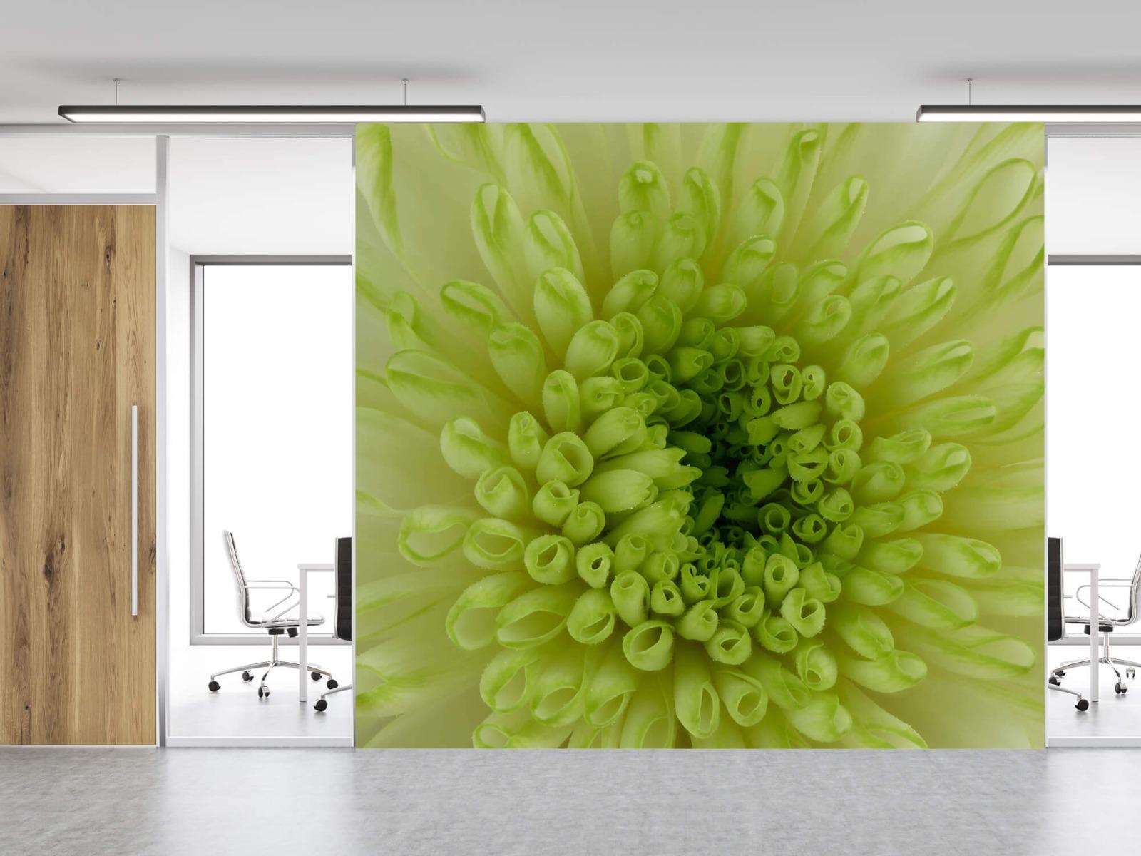 Overige - Close-up bloem - Woonkamer 11