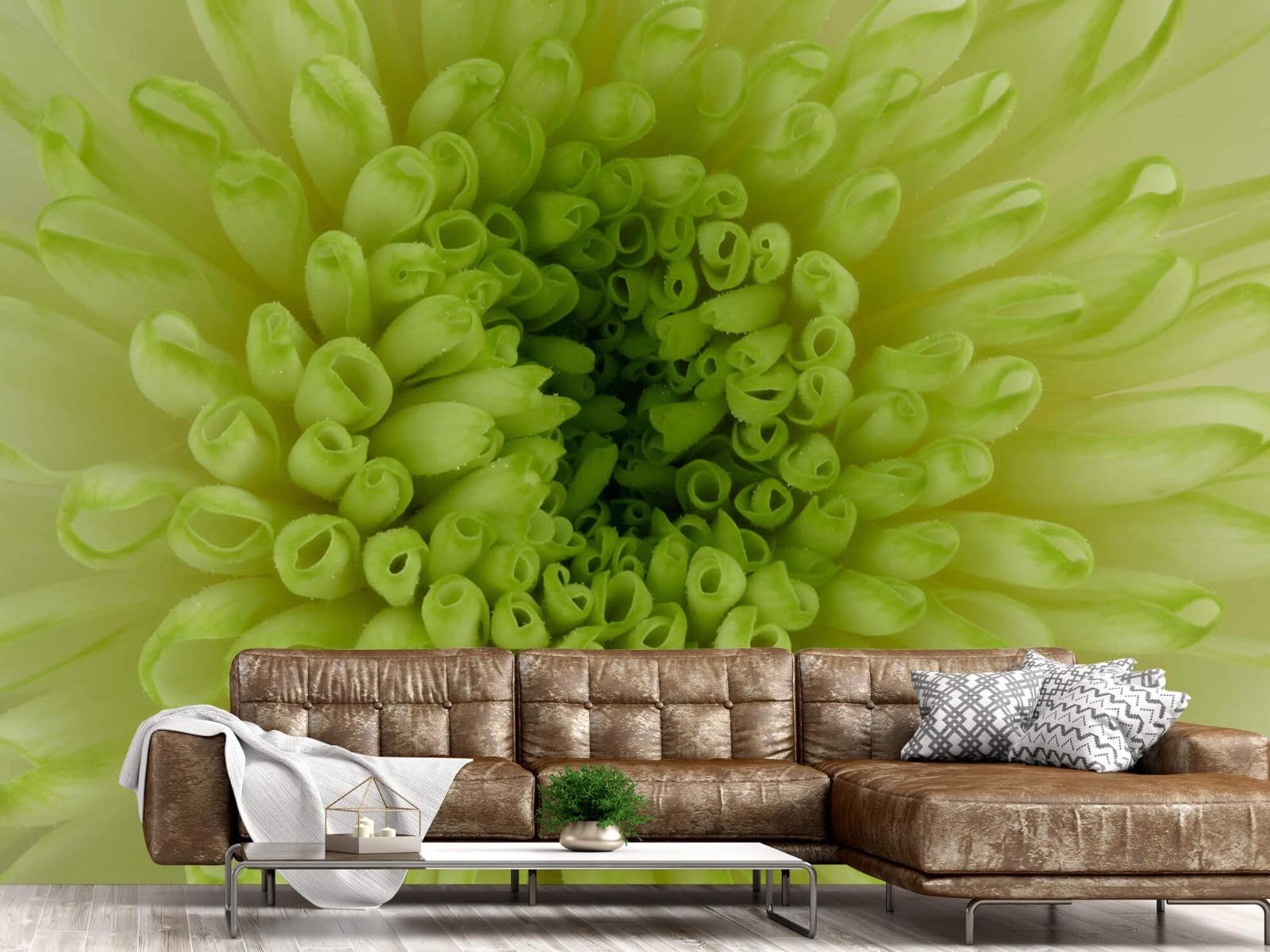 Overige - Close-up bloem - Woonkamer 14