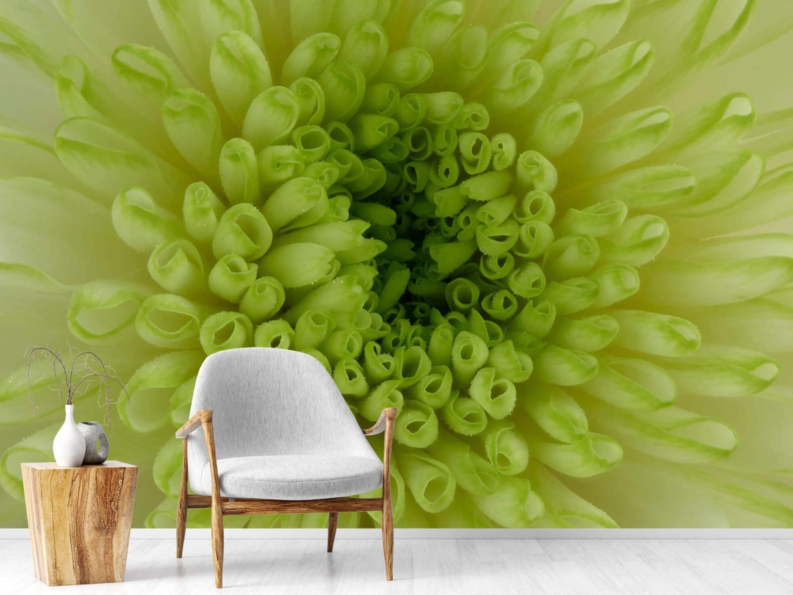 Overige - Close-up bloem - Woonkamer 18