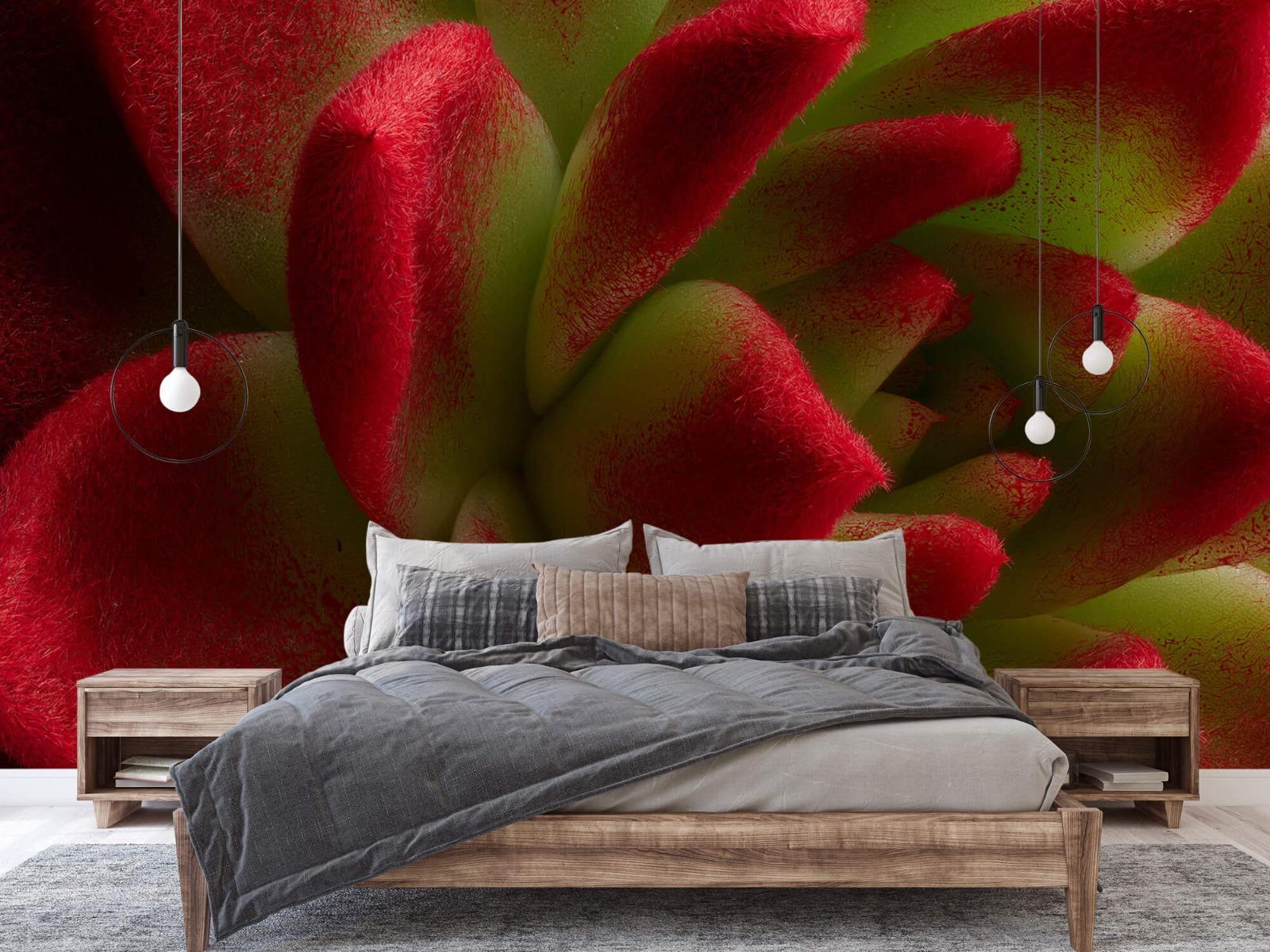 Overige - Rode cactus - Slaapkamer 1