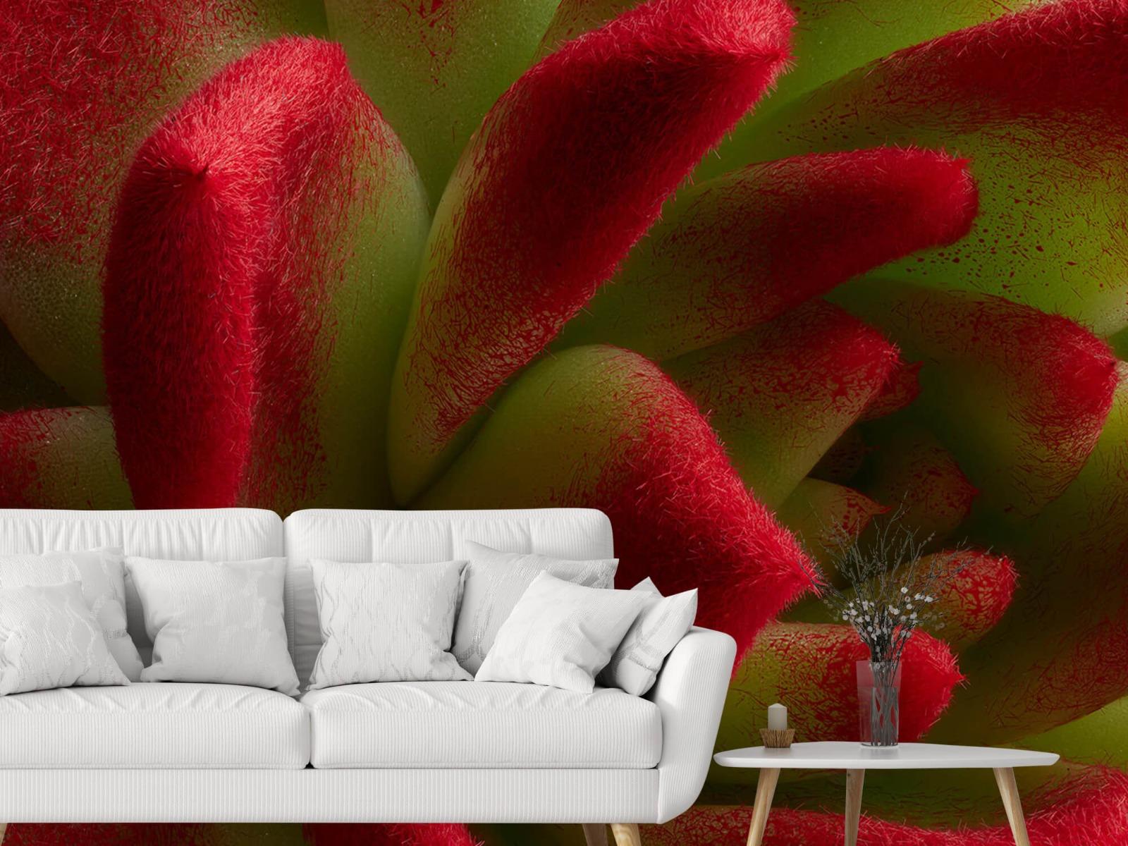 Overige - Rode cactus - Slaapkamer 2