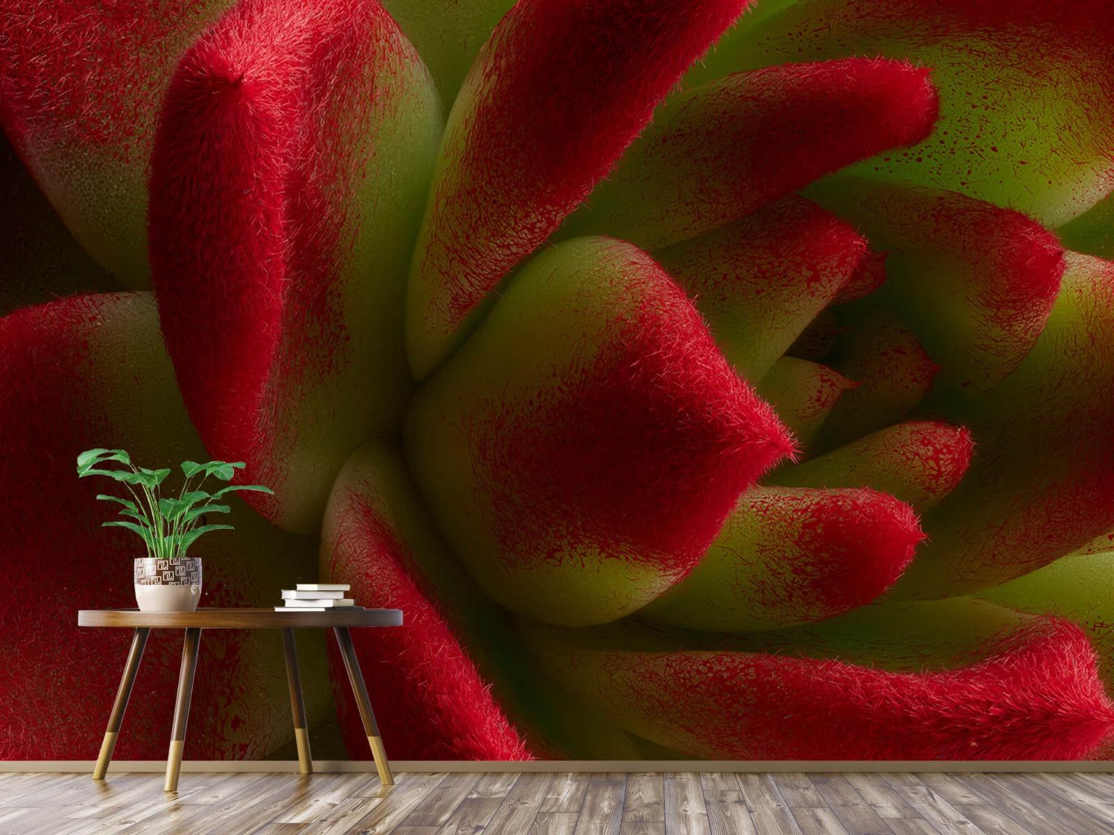 Overige - Rode cactus - Slaapkamer 3