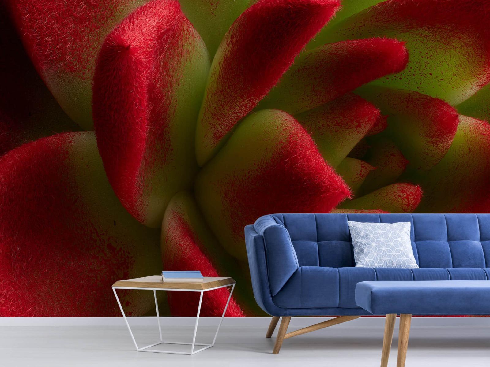 Overige - Rode cactus - Slaapkamer 4