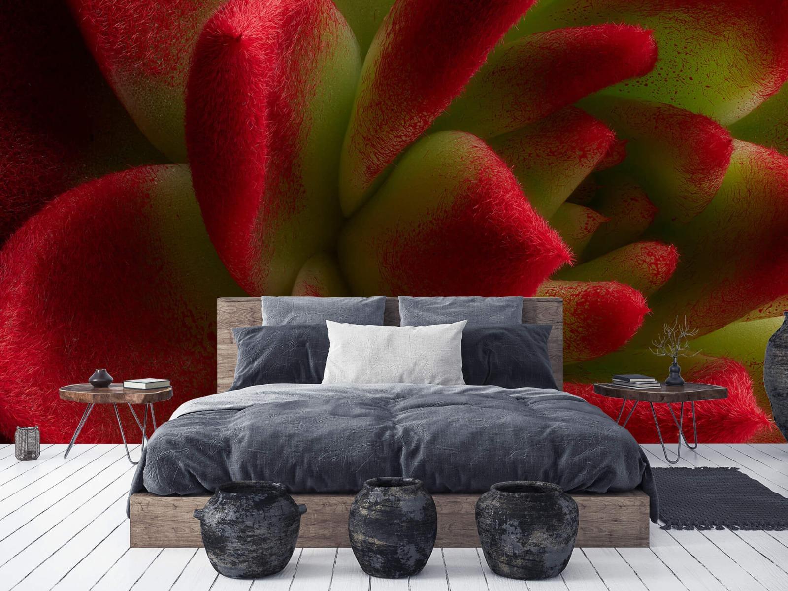 Overige - Rode cactus - Slaapkamer 5