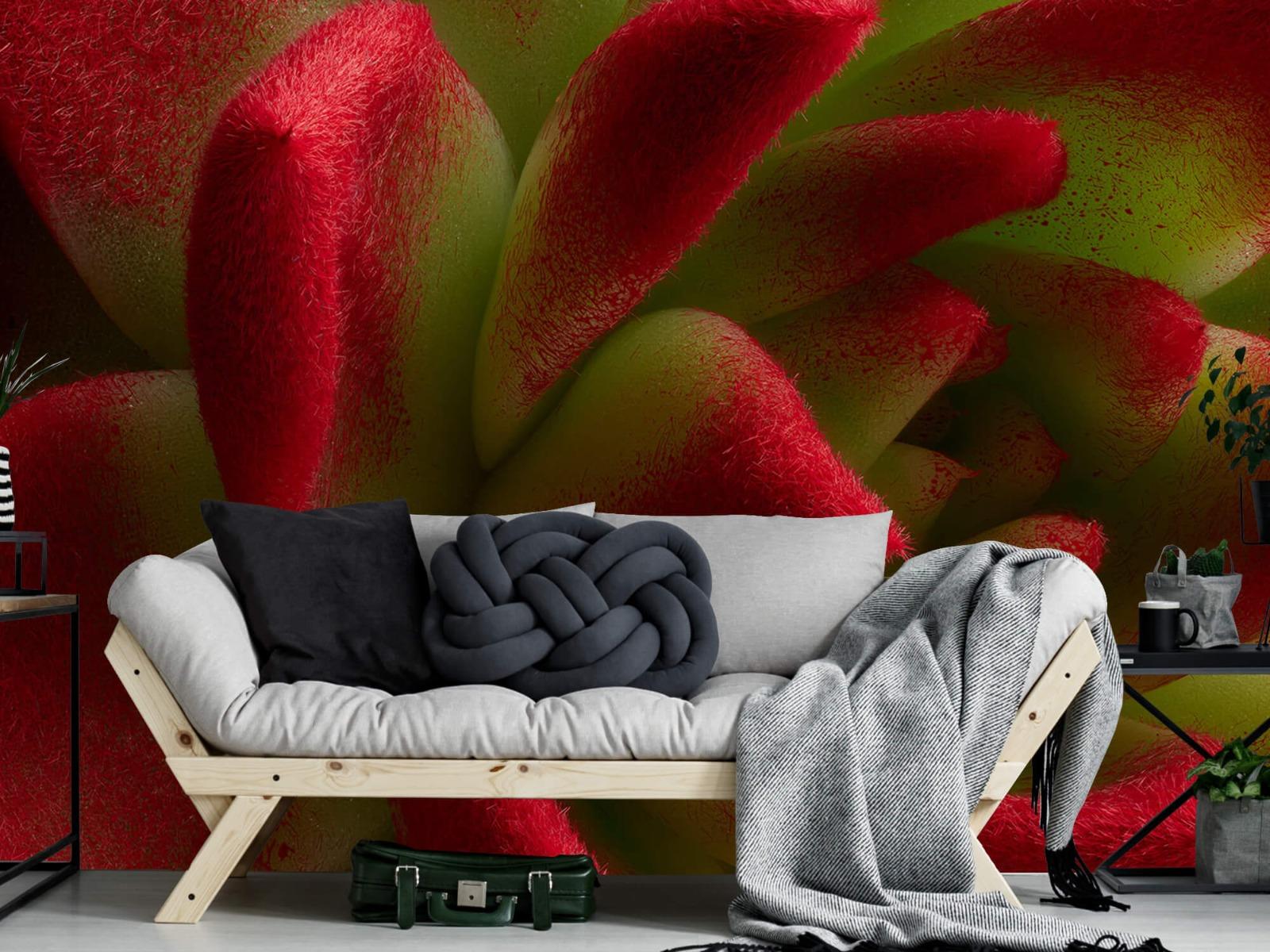 Overige - Rode cactus - Slaapkamer 6