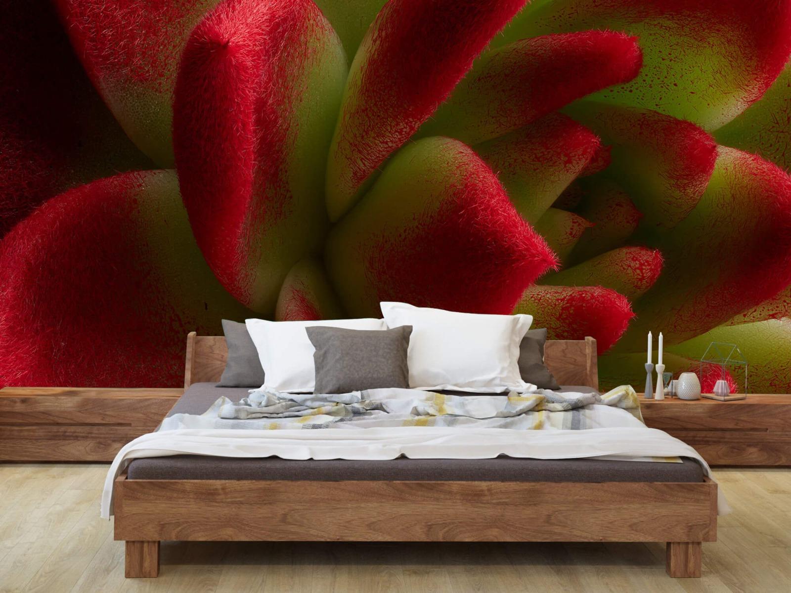 Overige - Rode cactus - Slaapkamer 7