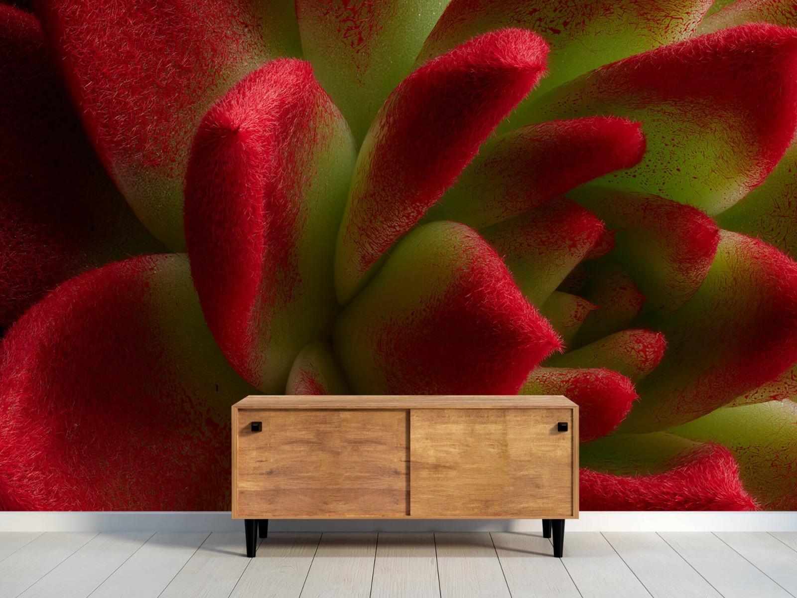 Overige - Rode cactus - Slaapkamer 9