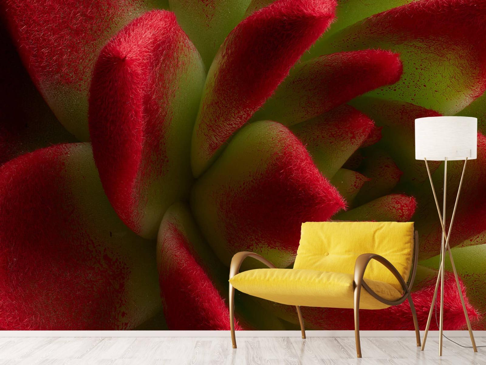 Overige - Rode cactus - Slaapkamer 10