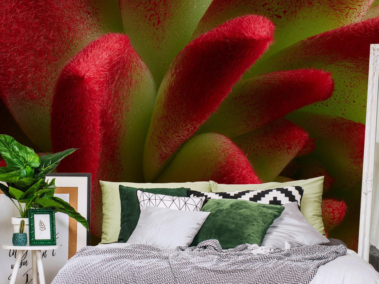 Overige - Rode cactus - Slaapkamer 12