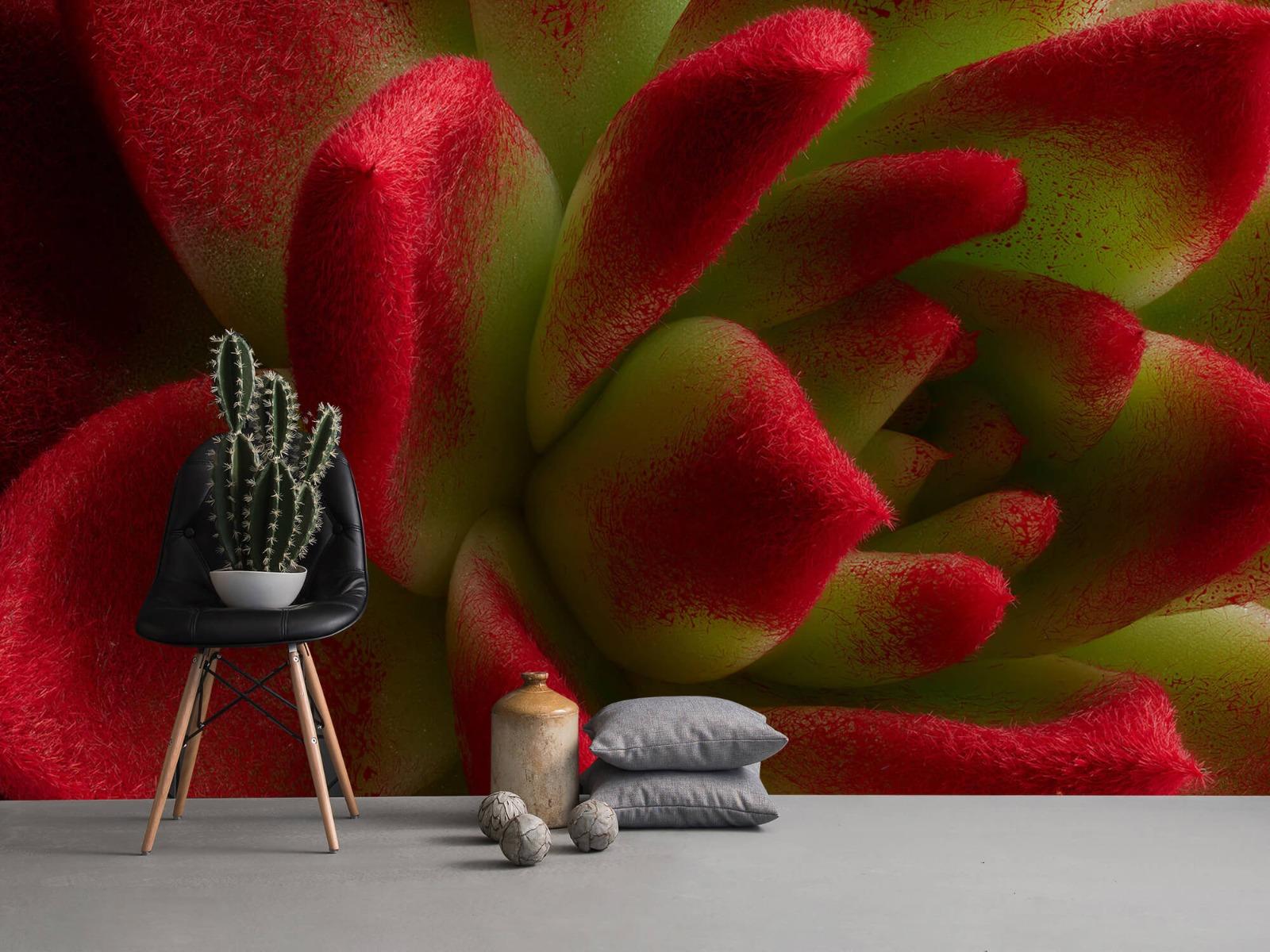 Overige - Rode cactus - Slaapkamer 13