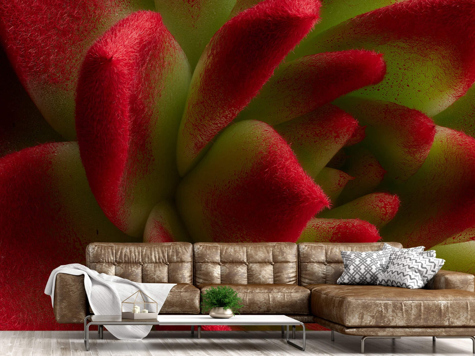Overige - Rode cactus - Slaapkamer 14