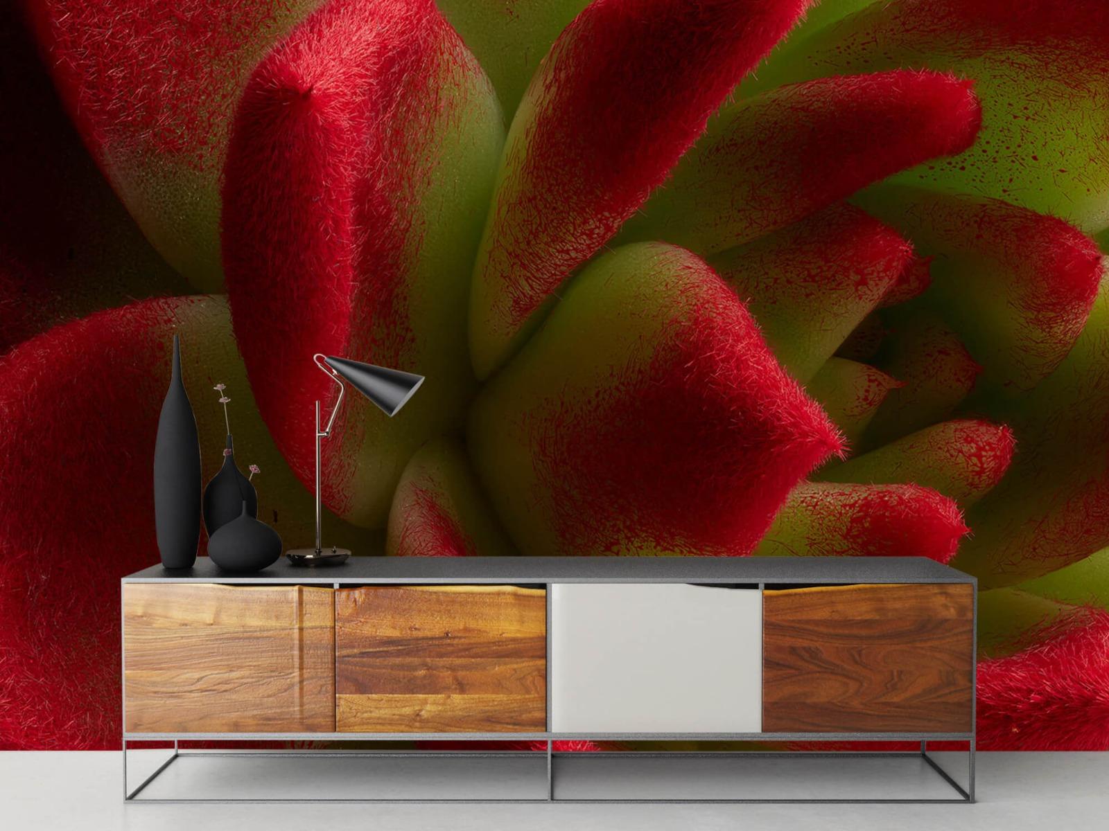 Overige - Rode cactus - Slaapkamer 16