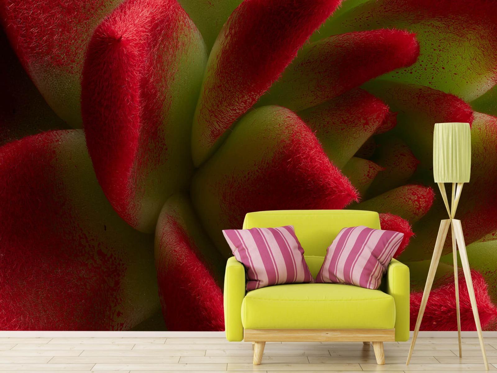 Overige - Rode cactus - Slaapkamer 17