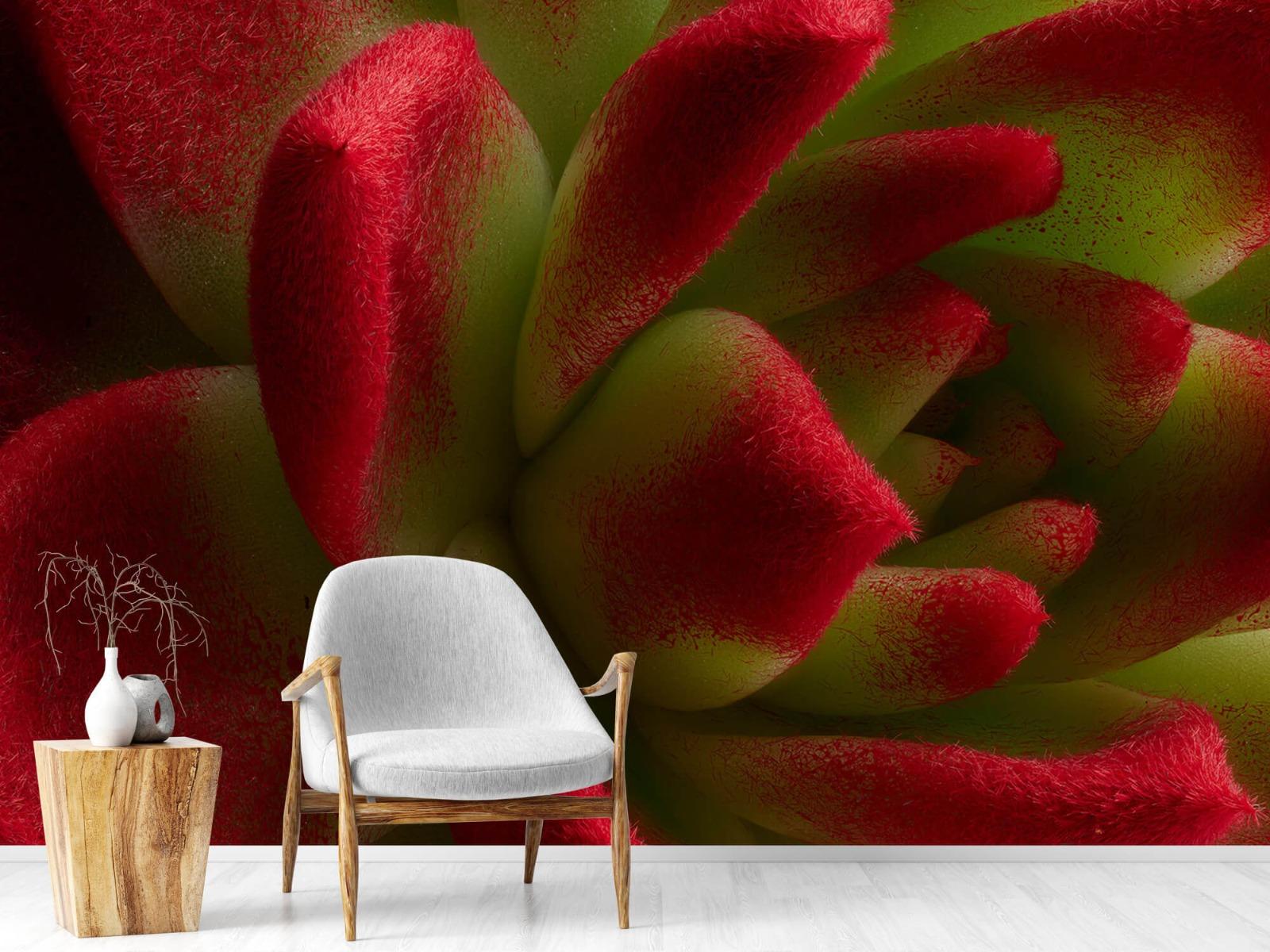 Overige - Rode cactus - Slaapkamer 18