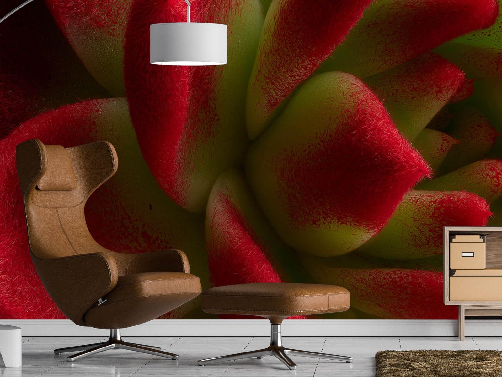Overige - Rode cactus - Slaapkamer 19