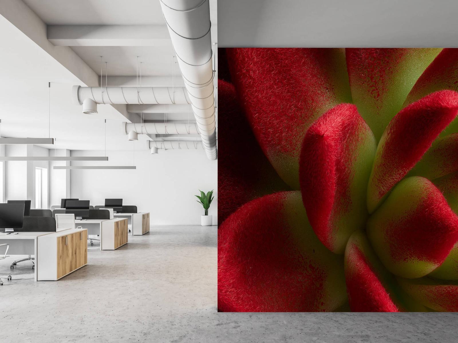 Overige - Rode cactus - Slaapkamer 21