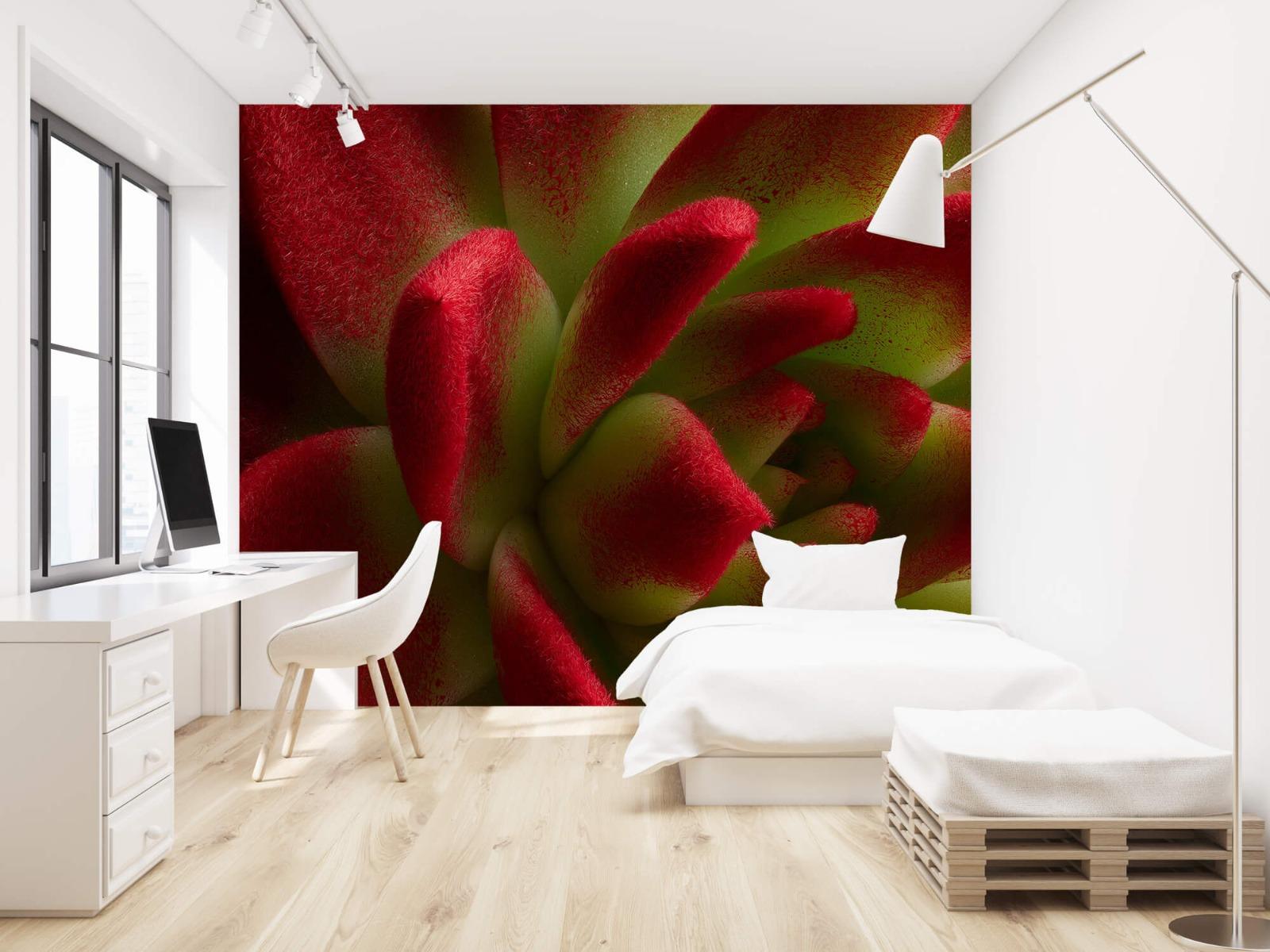 Overige - Rode cactus - Slaapkamer 22
