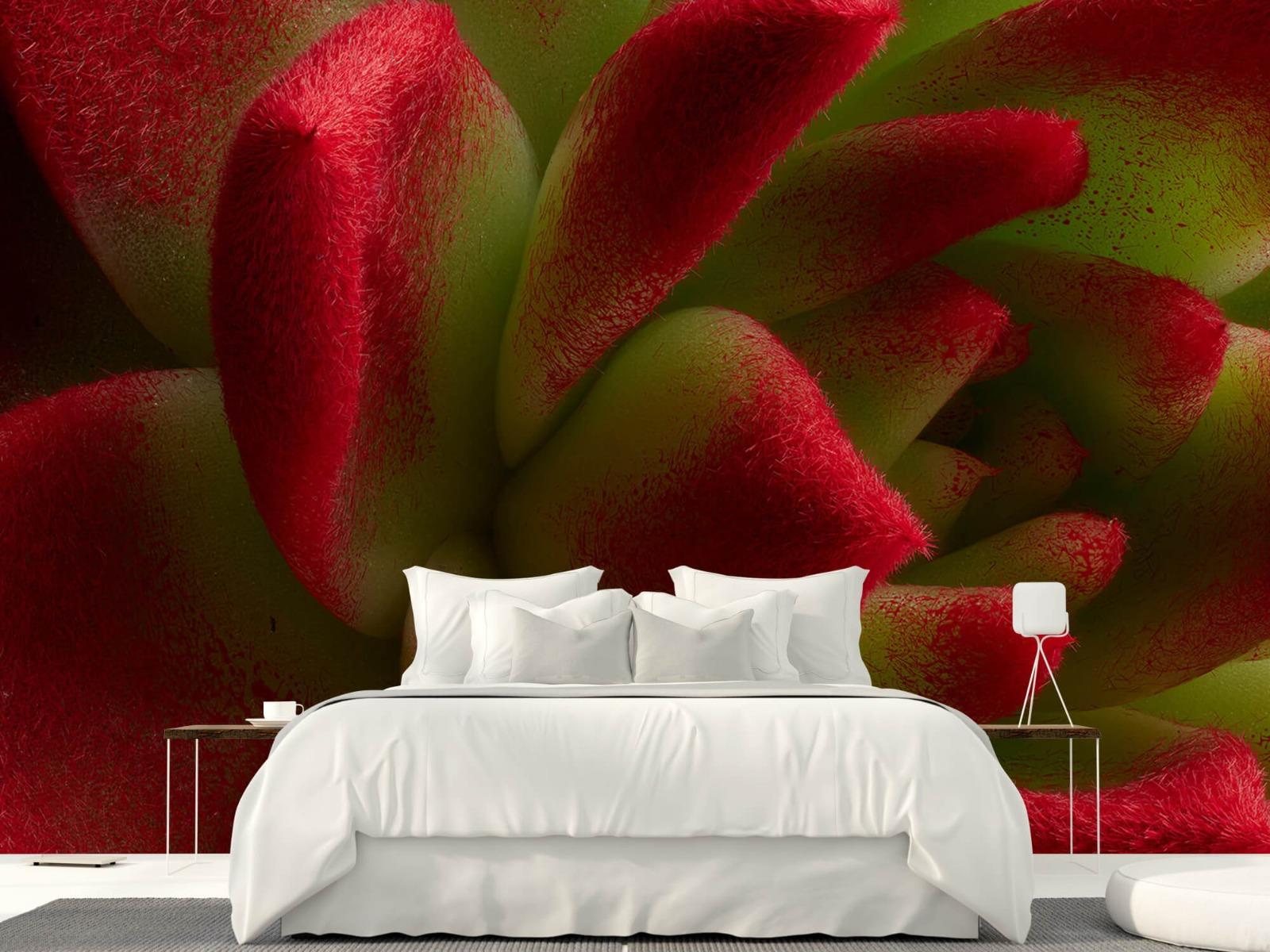 Overige - Rode cactus - Slaapkamer 23