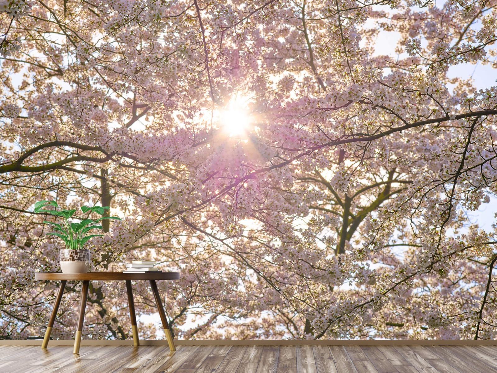 Zon - Bloesem in de zon - Woonkamer 3