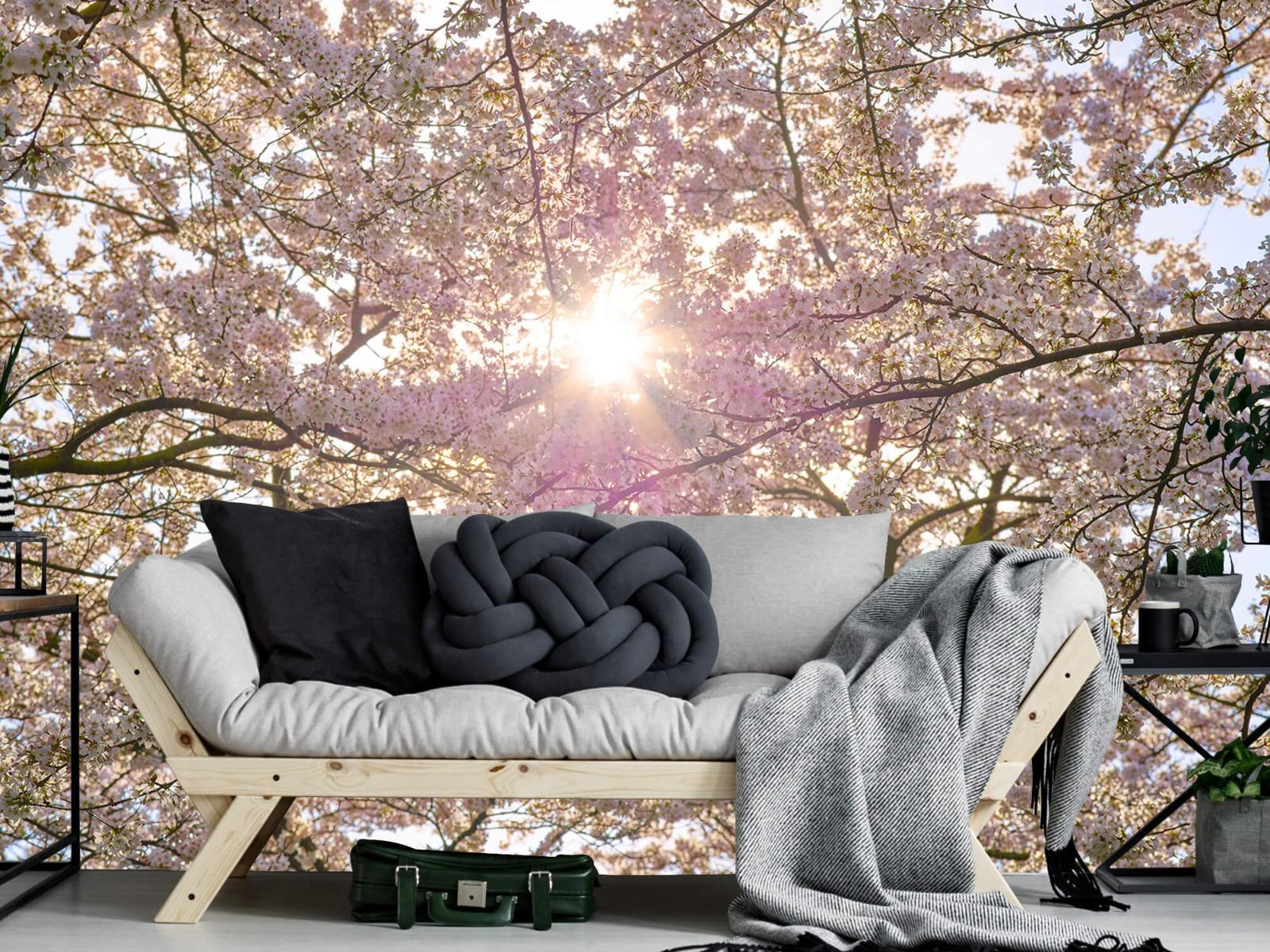 Zon - Bloesem in de zon - Woonkamer 6