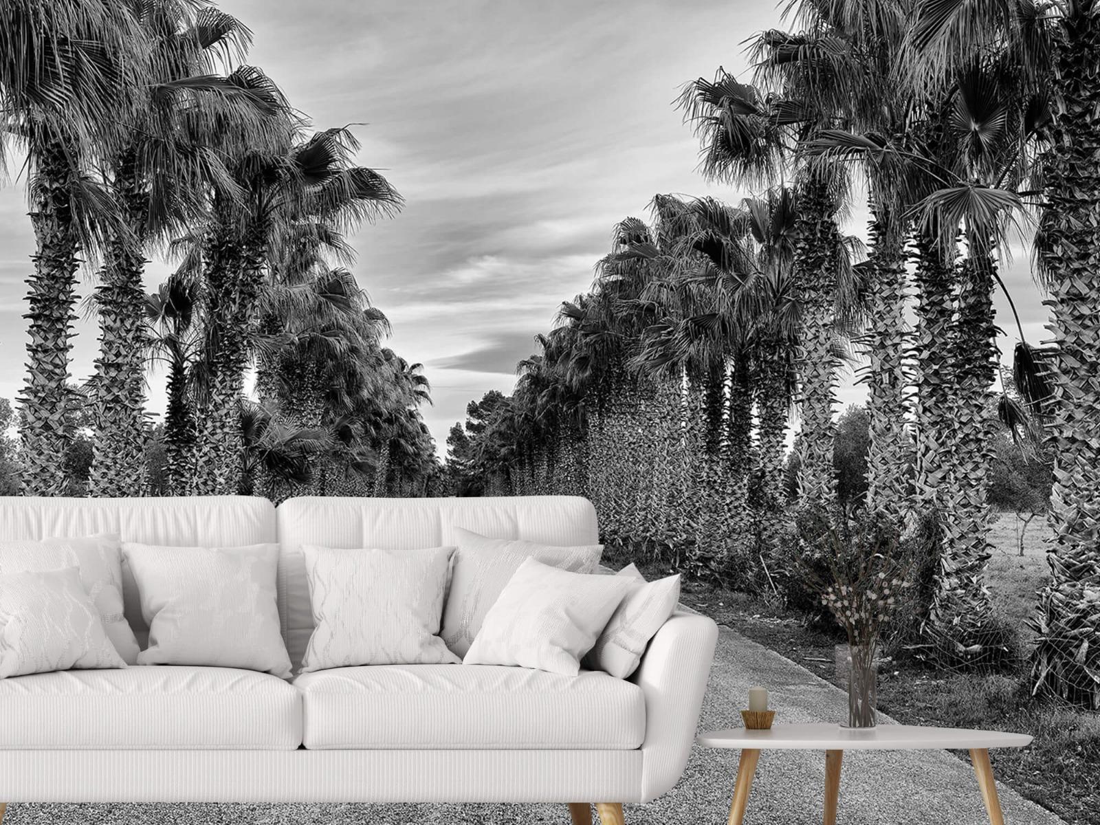 Palmbomen - Straat met palmbomen - Woonkamer 3