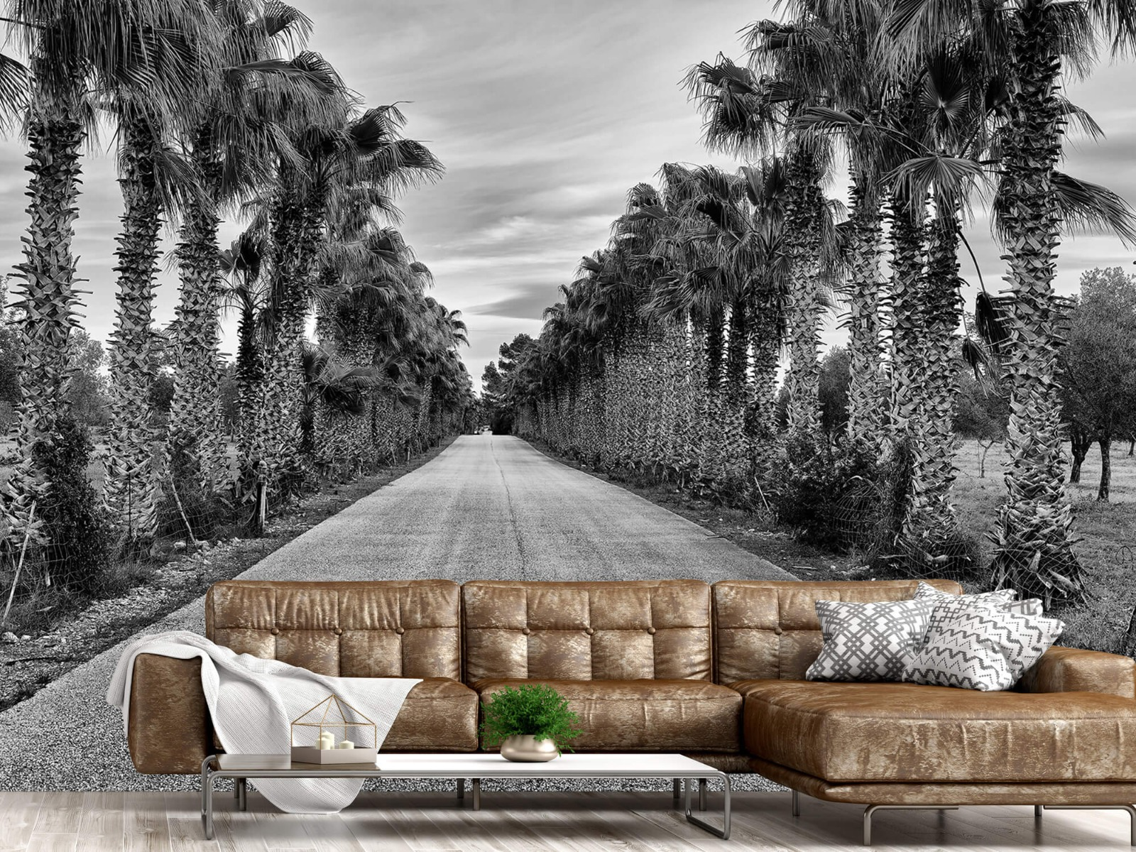 Palmbomen - Straat met palmbomen - Woonkamer 14