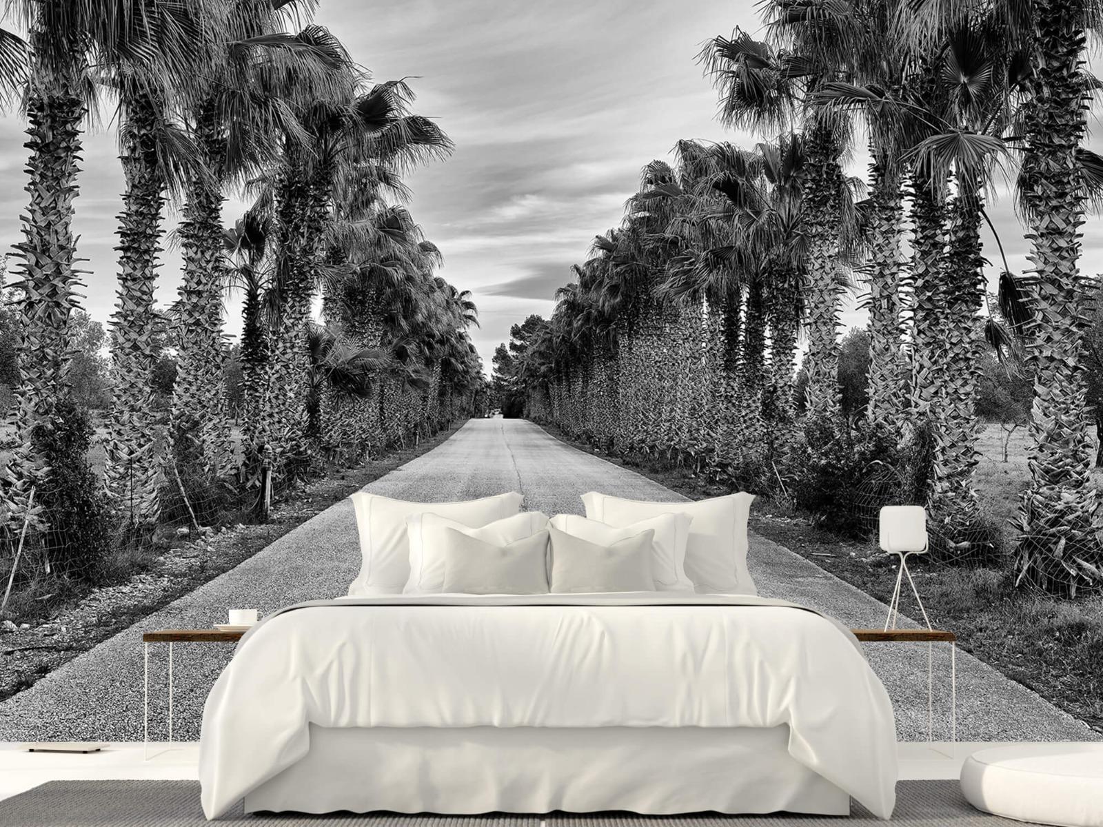 Palmbomen - Straat met palmbomen - Woonkamer 23