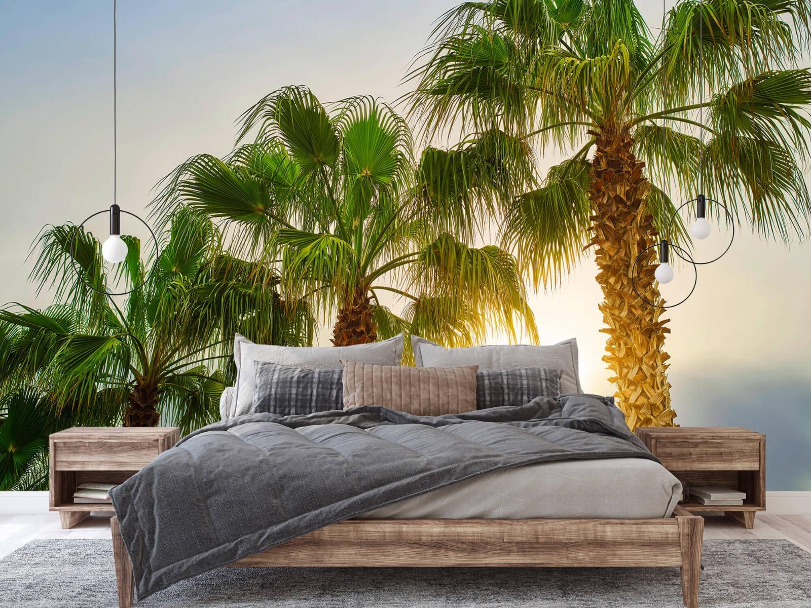 Palmbomen - Palmbomen met zon - Gang 2
